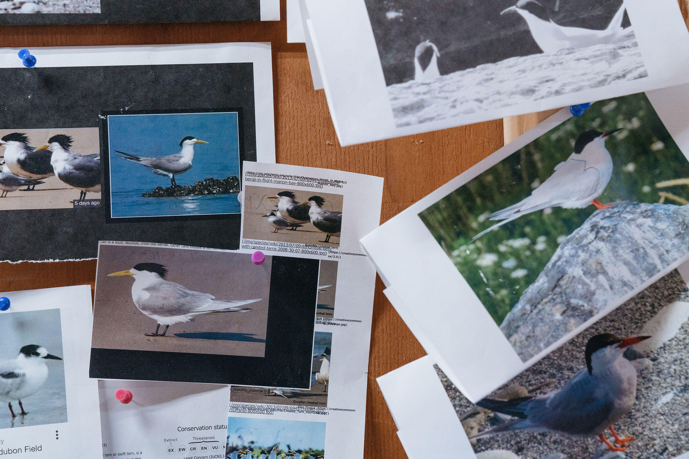 References for bird decoy production pinned to the wall. Tristan Spinski