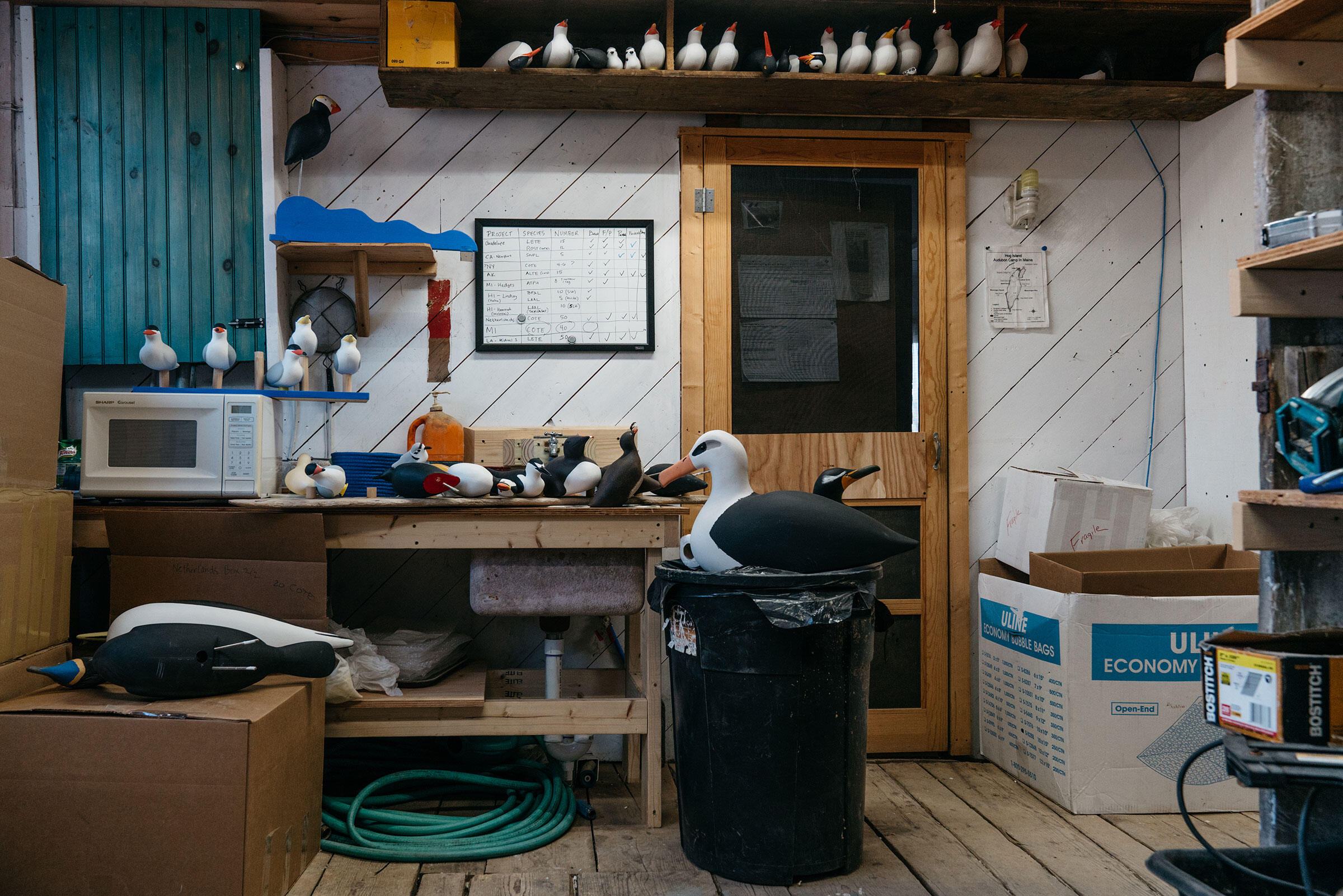 The decoy operation recently changed hands from Jim and Nancy Henry, owners of Mad River Decoy in the mountains of Vermont, to the Audubon Seabird Restoration Program (Project Puffin) in Bremen, Maine. Tristan Spinski