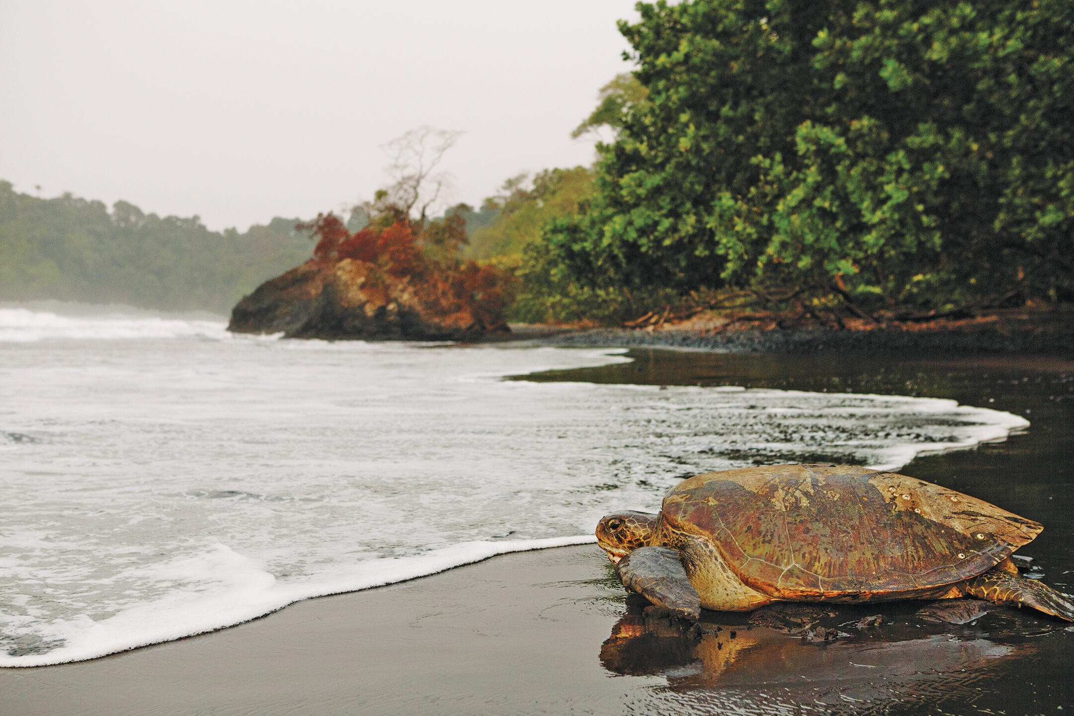 The beaches of southern Bioko are nesting grounds for four species of sea turtle, whose eggs and meat are a sought-after food source for locals. Tristan Spinski