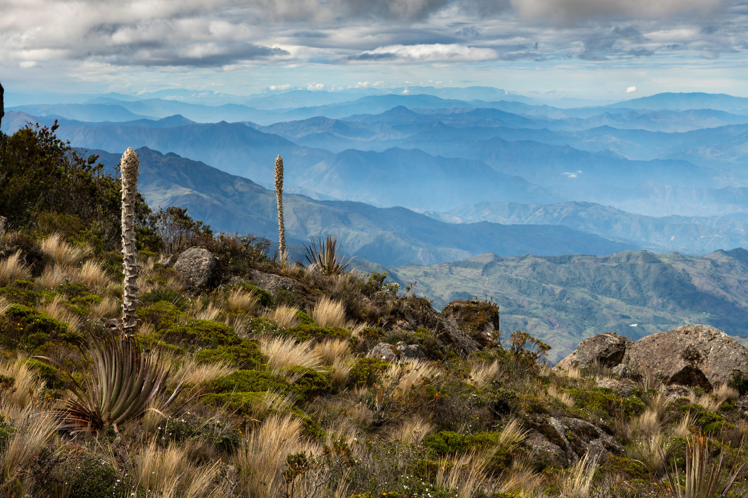 Cerro de Arcos habitat is under threat from land clearing. Murray Cooper