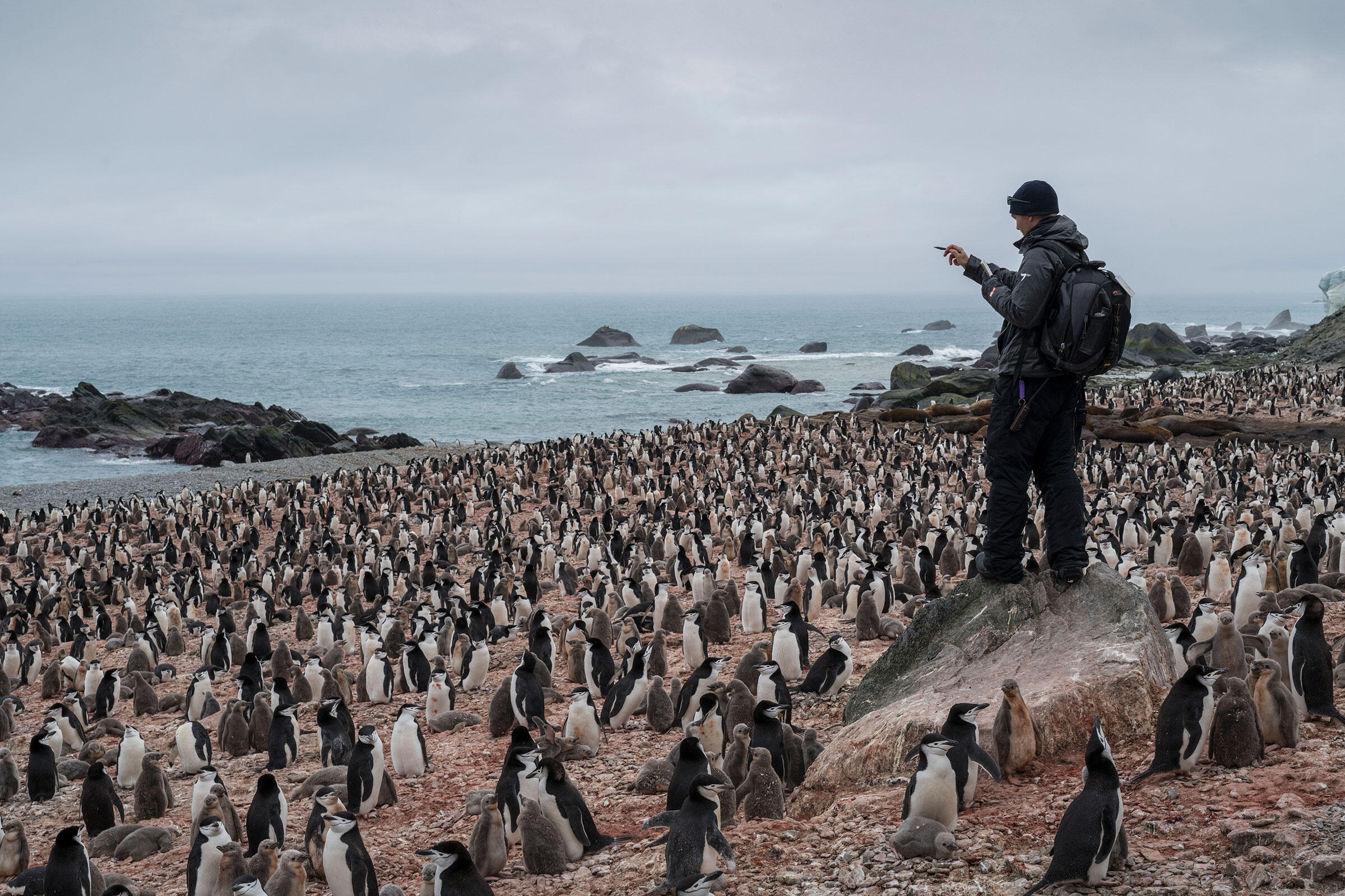 Noah Strycker censuses Chinstrap Penguins during this month's expedition to Elephant Island. Christian Åslund