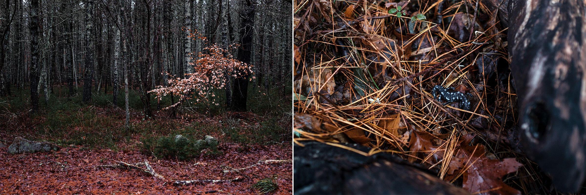 Photos: Annabelle Hendersøn