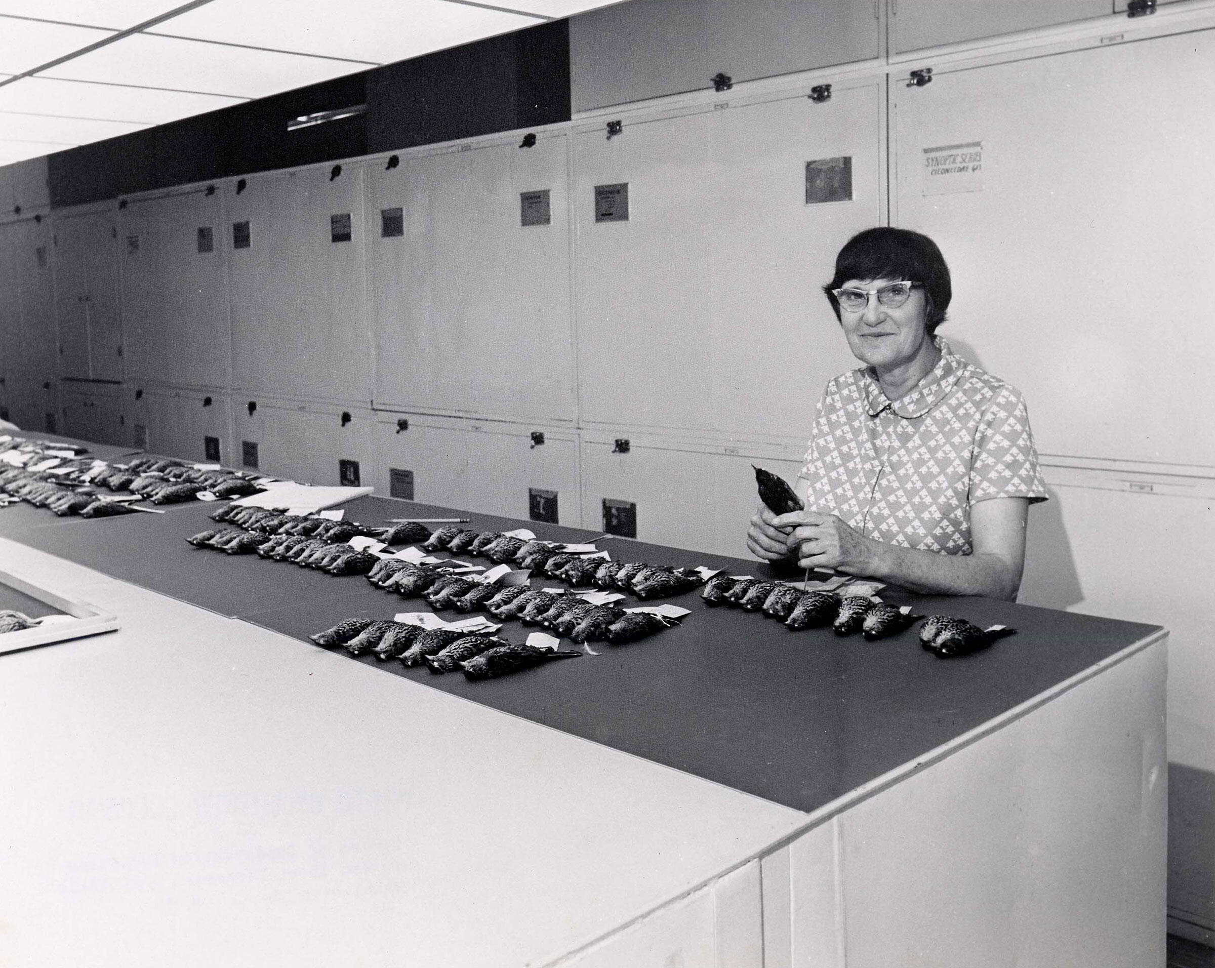 Roxie Laybourne with bird specimens, National Museum of Natural History, Division of Birds. Smithsonian Institution Archives
