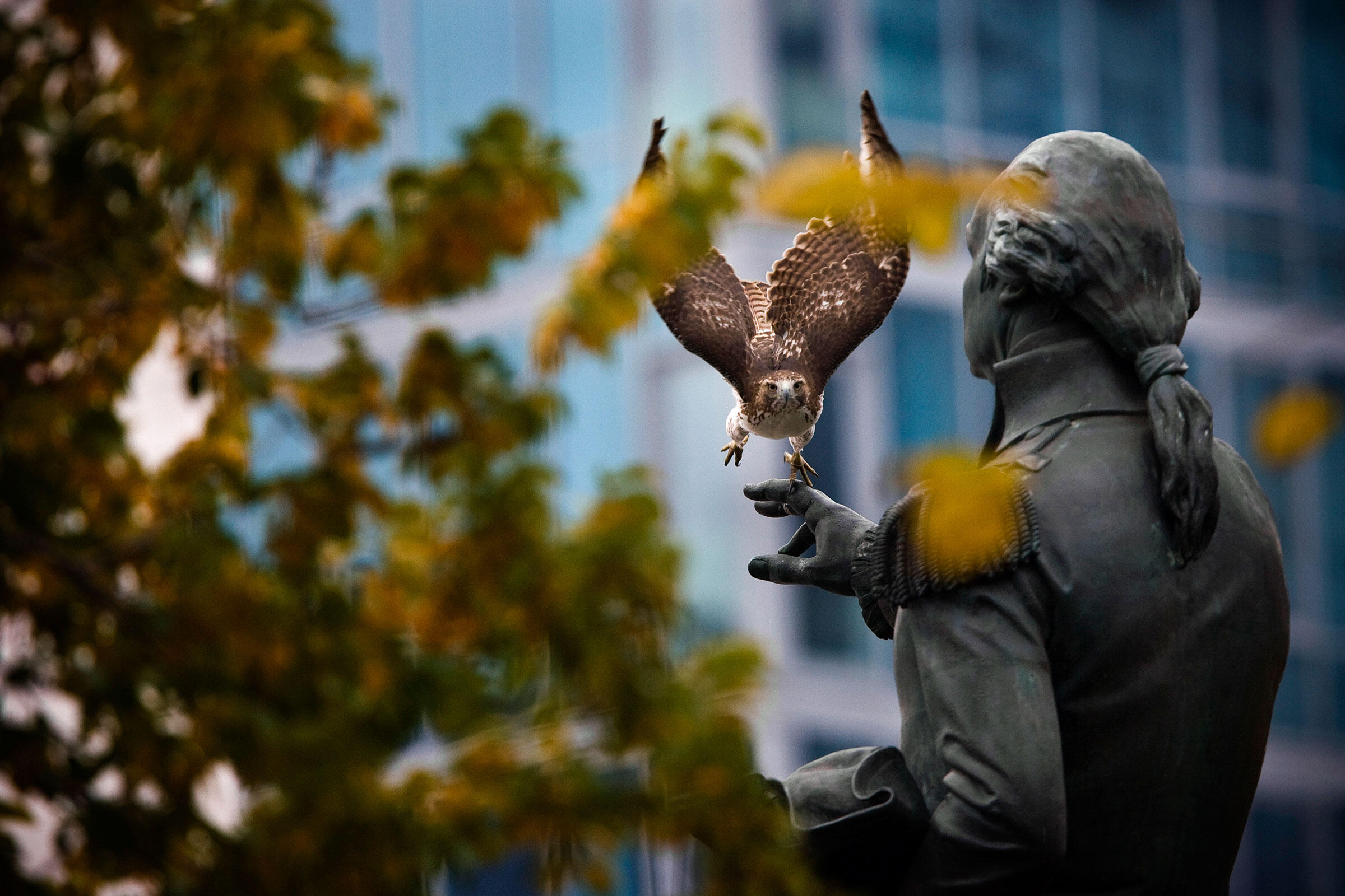 No NYC landmark is safe from hawks—not even this 160-year-old statue of George Washington. Francois Portmann