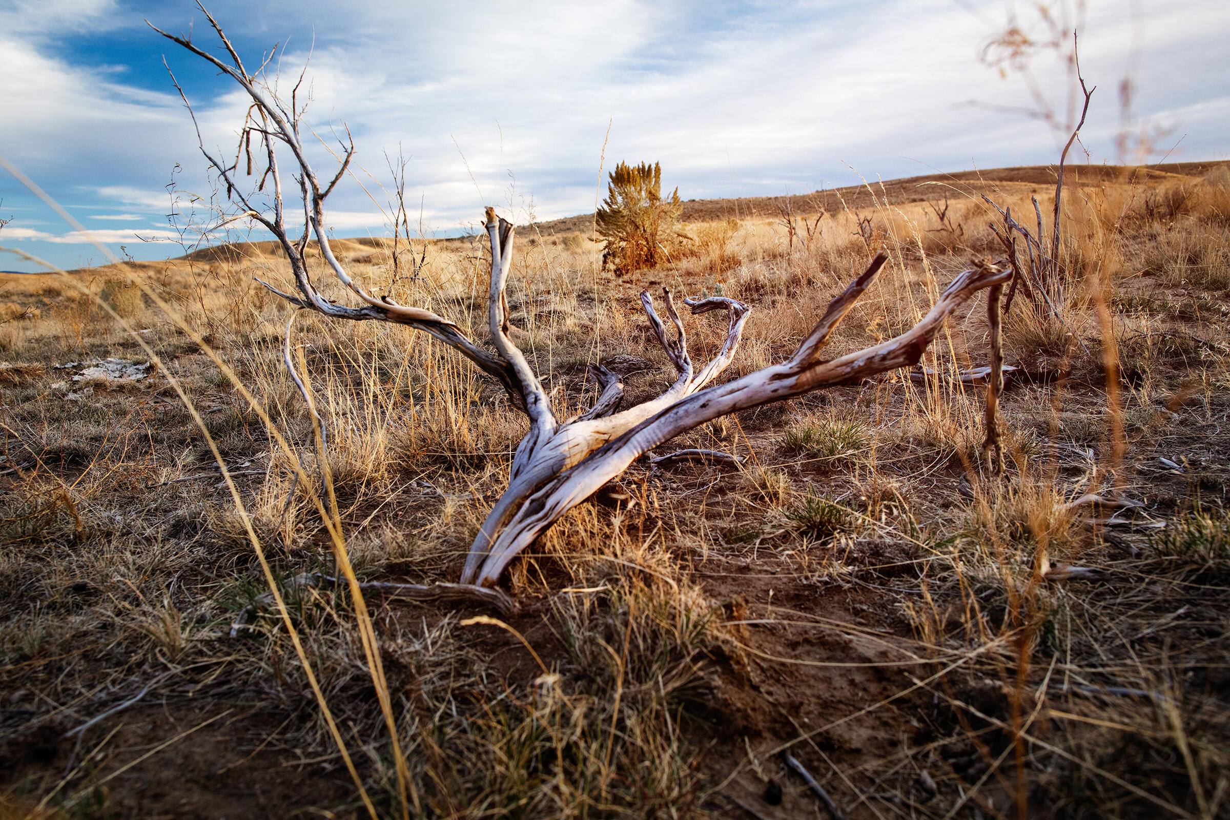 Behind a dead plant's skeleton, a healthy sagebrush shrub grows at the site of the 2012 Danner Loop fire in Oregon—the first area replanted through the Sagebrush in Prisons Project. Mike Fernandez/Audubon