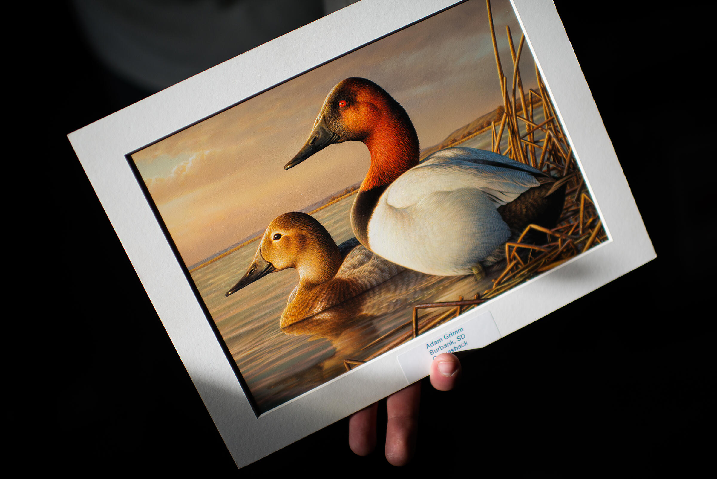 Grimm's rendering of a pair of Canvasbacks, which won the 2013 contest, is the product of hundreds of hours of photography and painting. Jon Lowenstein