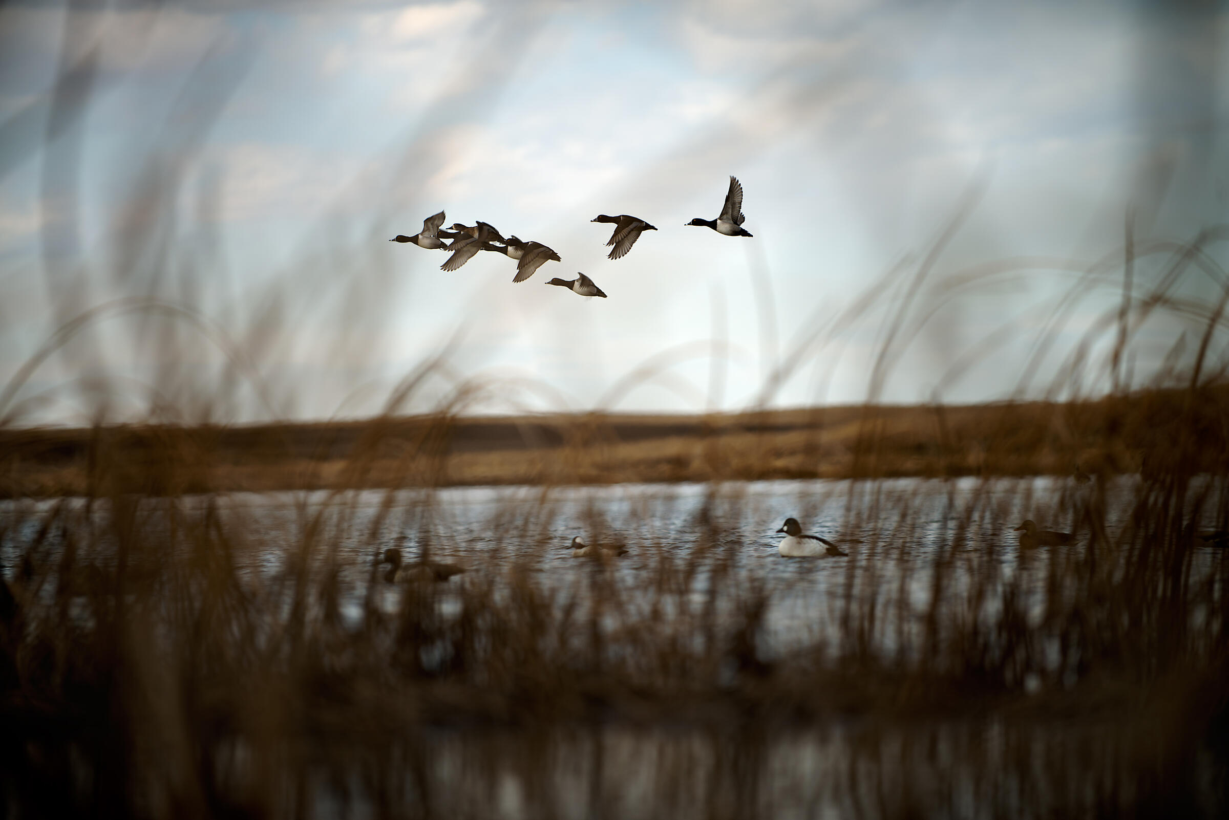 The Fish and Wildlife Service uses proceeds from the sale of duck stamps to purchase and protect habitat like this in the National Wildlife Refuge System. Jon Lowenstein