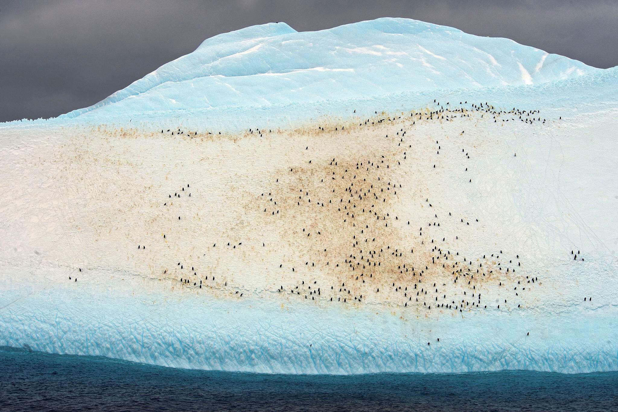 Adelie Penguins and Chinstrap Penguins mingle on an iceberg. Christopher Michel @ChrisMichel