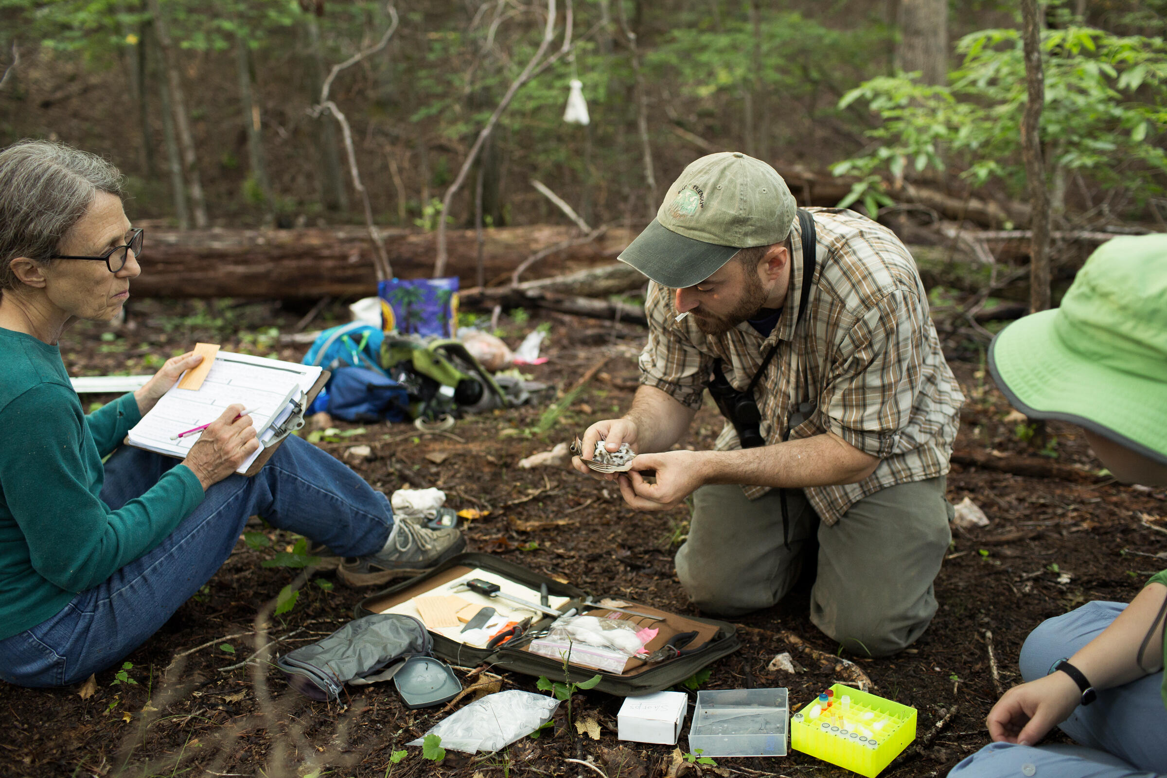 One of dozens of volunteers to help with the project, Forsyth Audubon volunteer Jean Chamberlain (left), takes Wood Thrush measurements from scientist Tim Guida at Pilot Mountain. Justin Cook