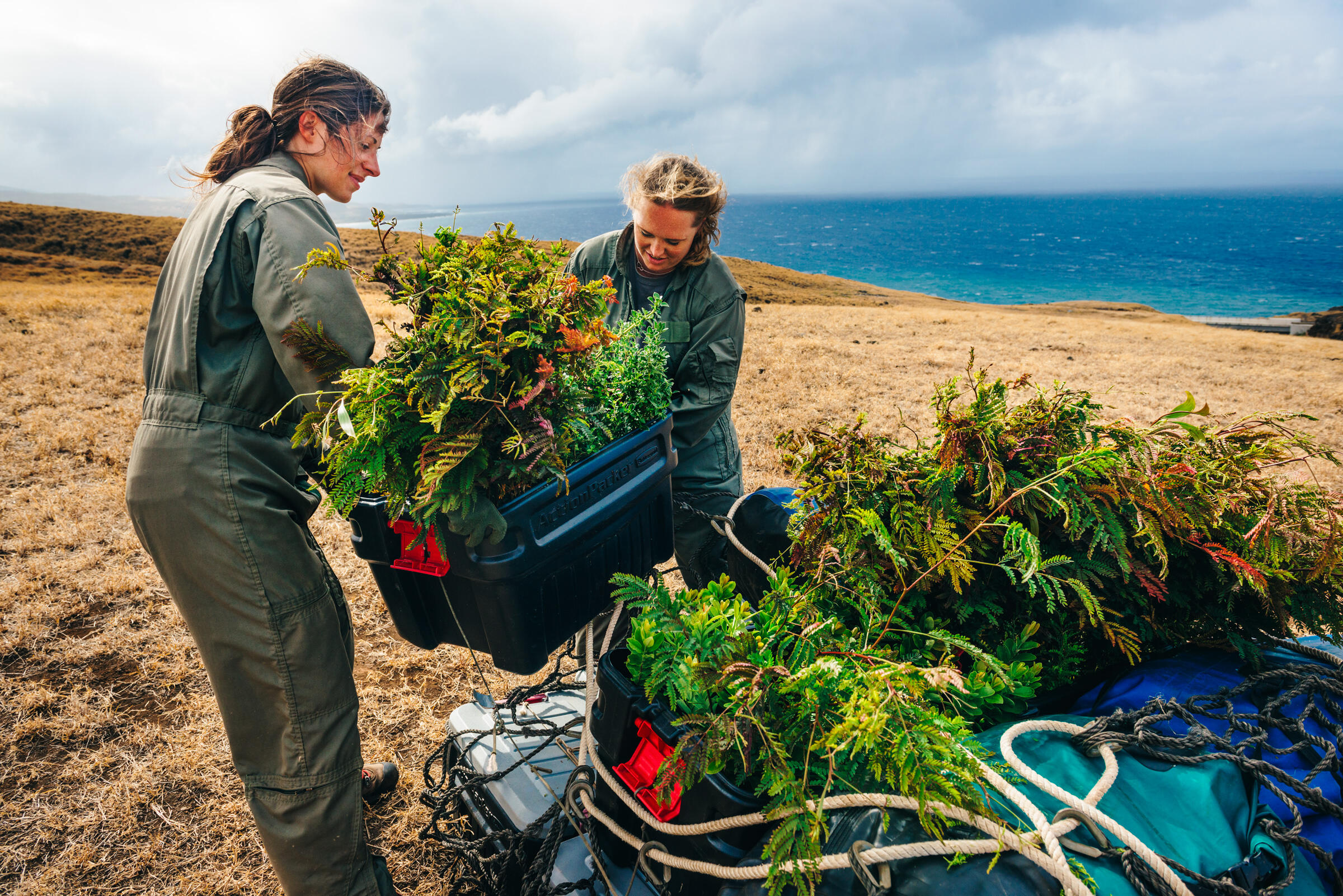 """Rare plants are raised in a nursery and then transported to the restoration site. """"We have to baby every one and make it count,"""" says the Maui Forest Bird Recovery Project's Hanna Mounce (right). Ken Etzel"""