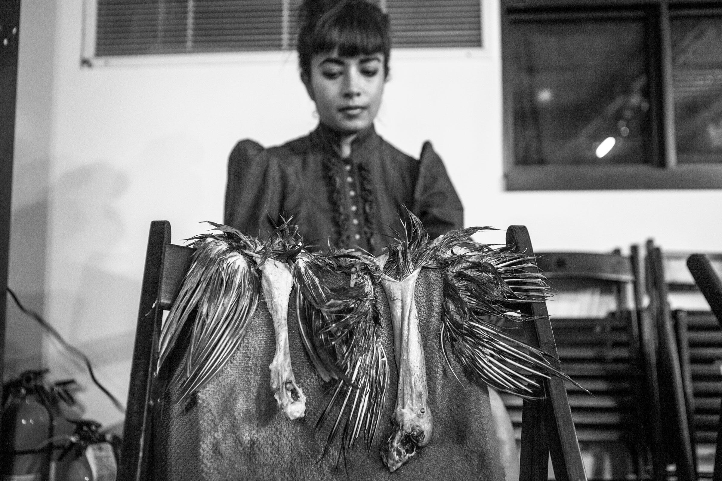 When the feathers and skin are dry, each piece hangs lightly over the back of a chair. Camilla Cerea/Audubon