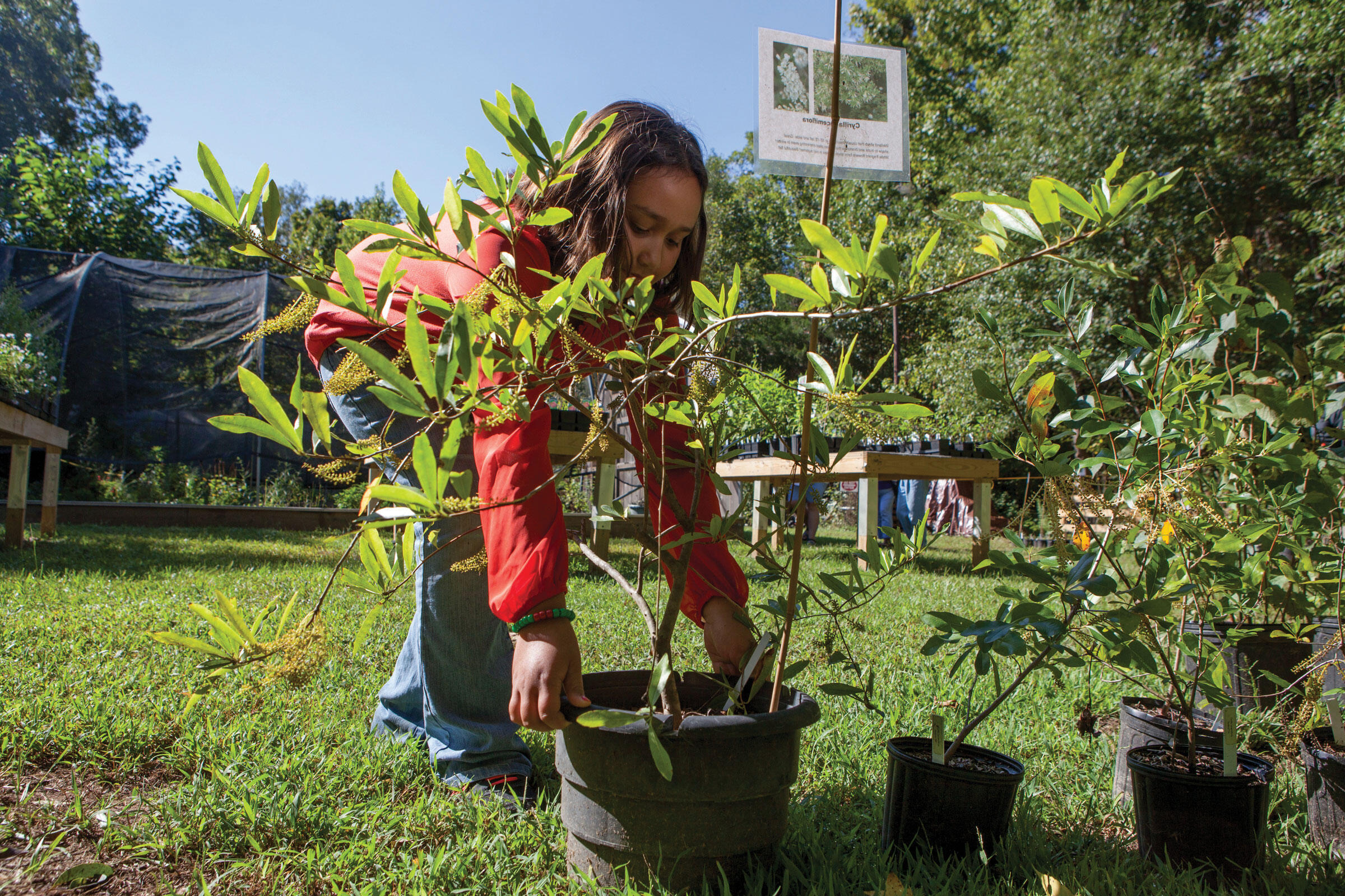 Native plants are better for native birds. That's why the Strawberry Plains Audubon Center in Mississippi hosts a native plant sale each fall (seen above). Camilla Cerea/Audubon
