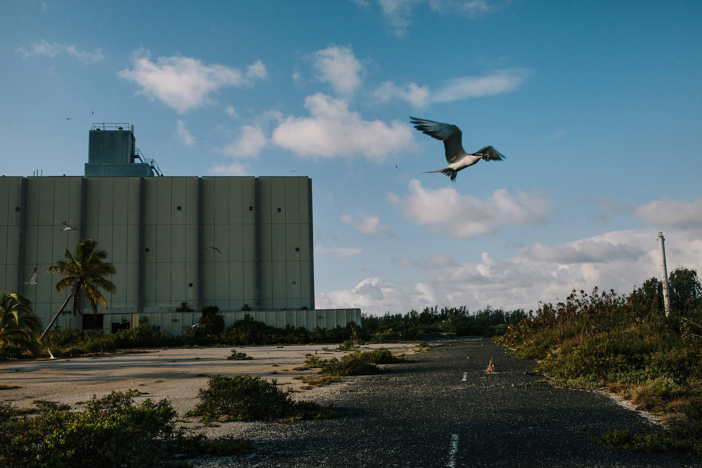 A tern flies in front of the hurricane-proof former Joint Operations Center. Tristan Spinski