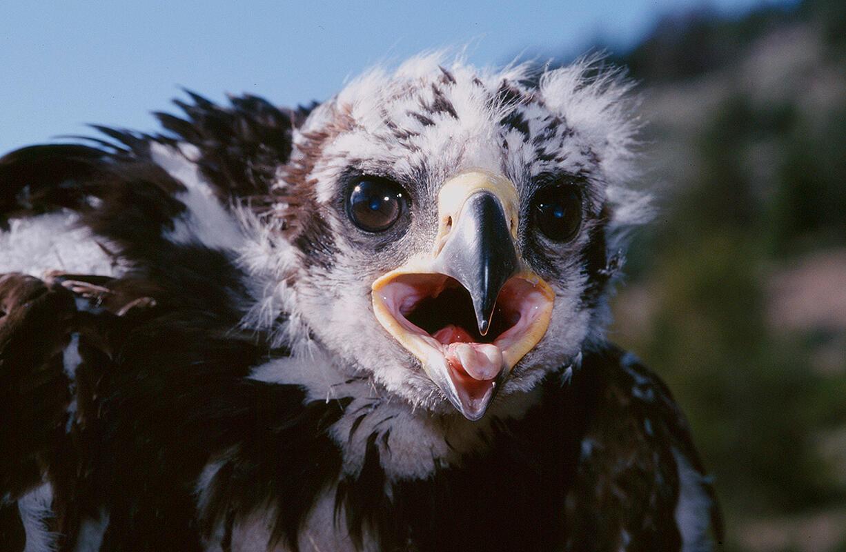 Golden Eagle/Professional Category. Don Jackson/Audubon Photography Awards