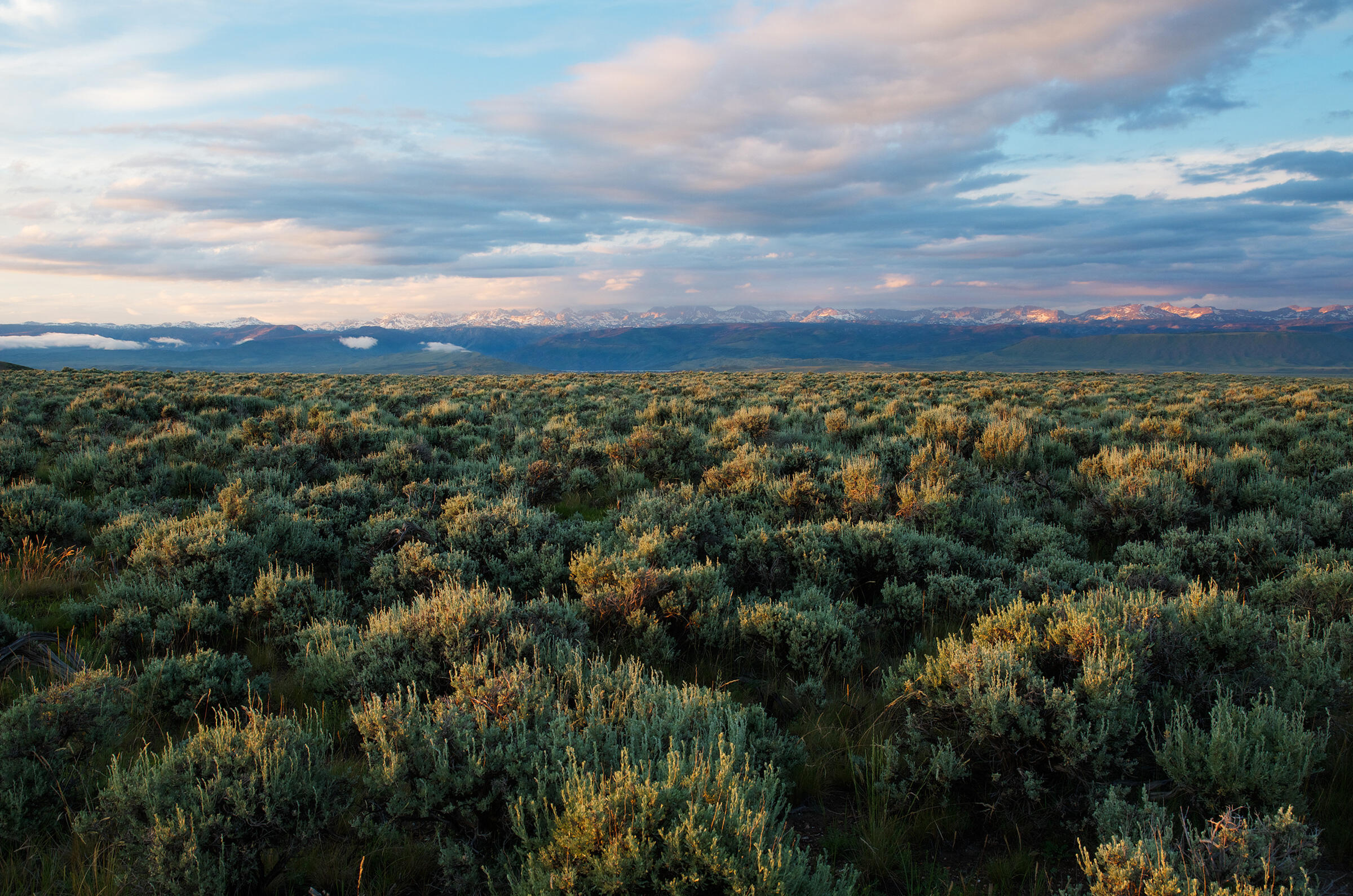 A sunset view on the sagebrush-covered top of Pinedale Mesa and the magnificent Wind River Range. Sublette County, Wyoming. Dave Showalter