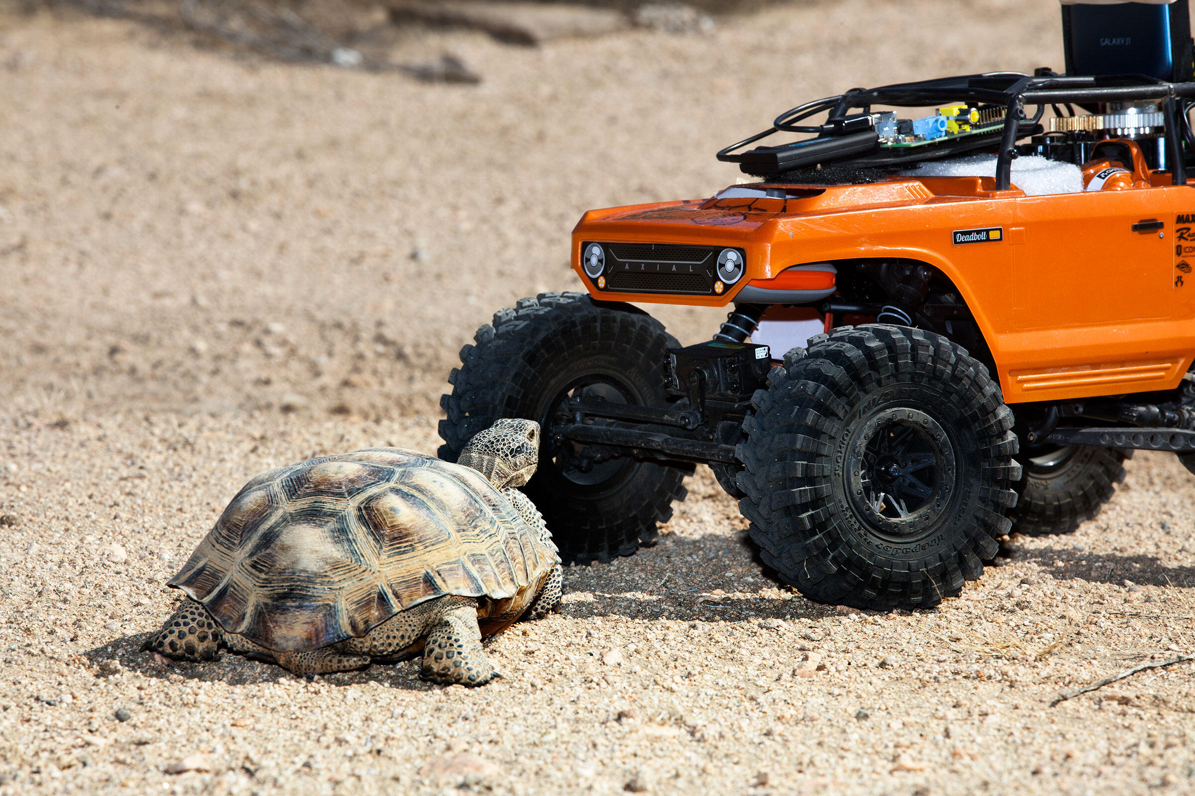 A California desert tortoise gets in close for a look at the Hardshell Labs rover. Tom Fowlks