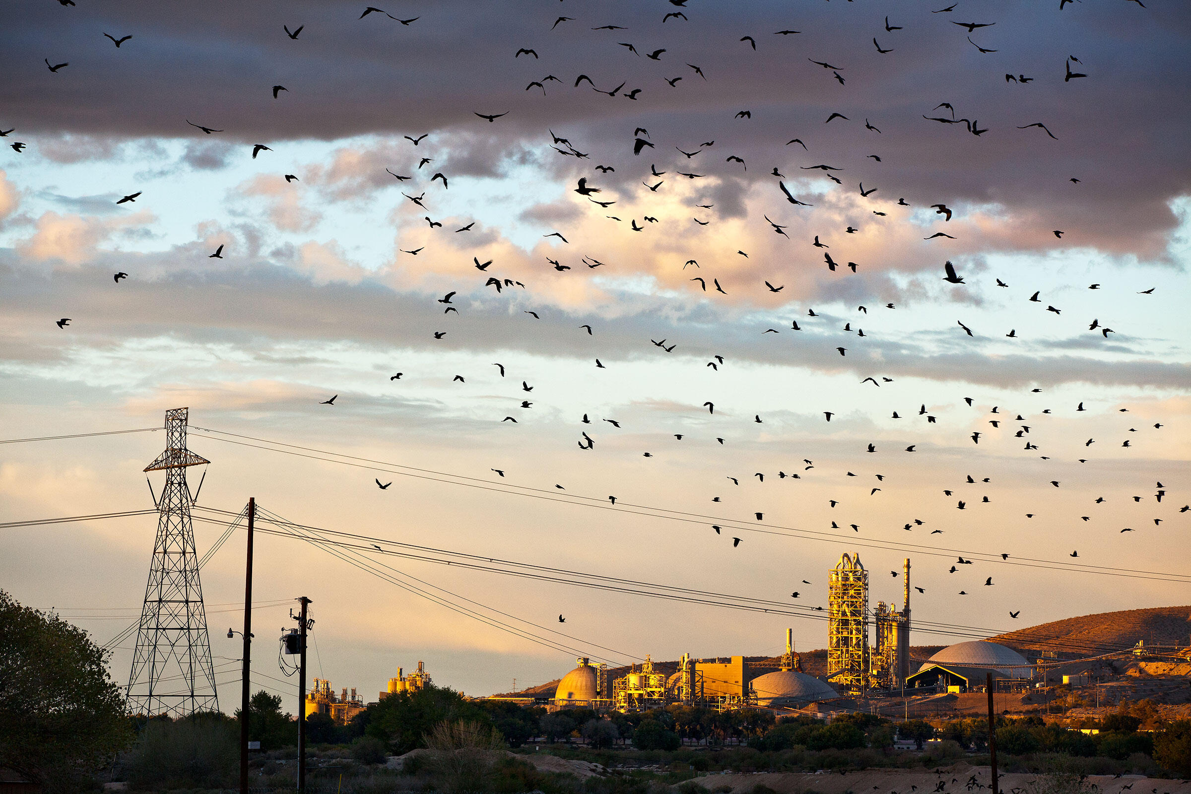 Ravens take flight after being dosed by the XADS laser. Only a few shots, aimed at a few birds, were required to clear this massive, 4,000-bird roost at a food-waste composting facility near Victorville, California. Tom Fowlks
