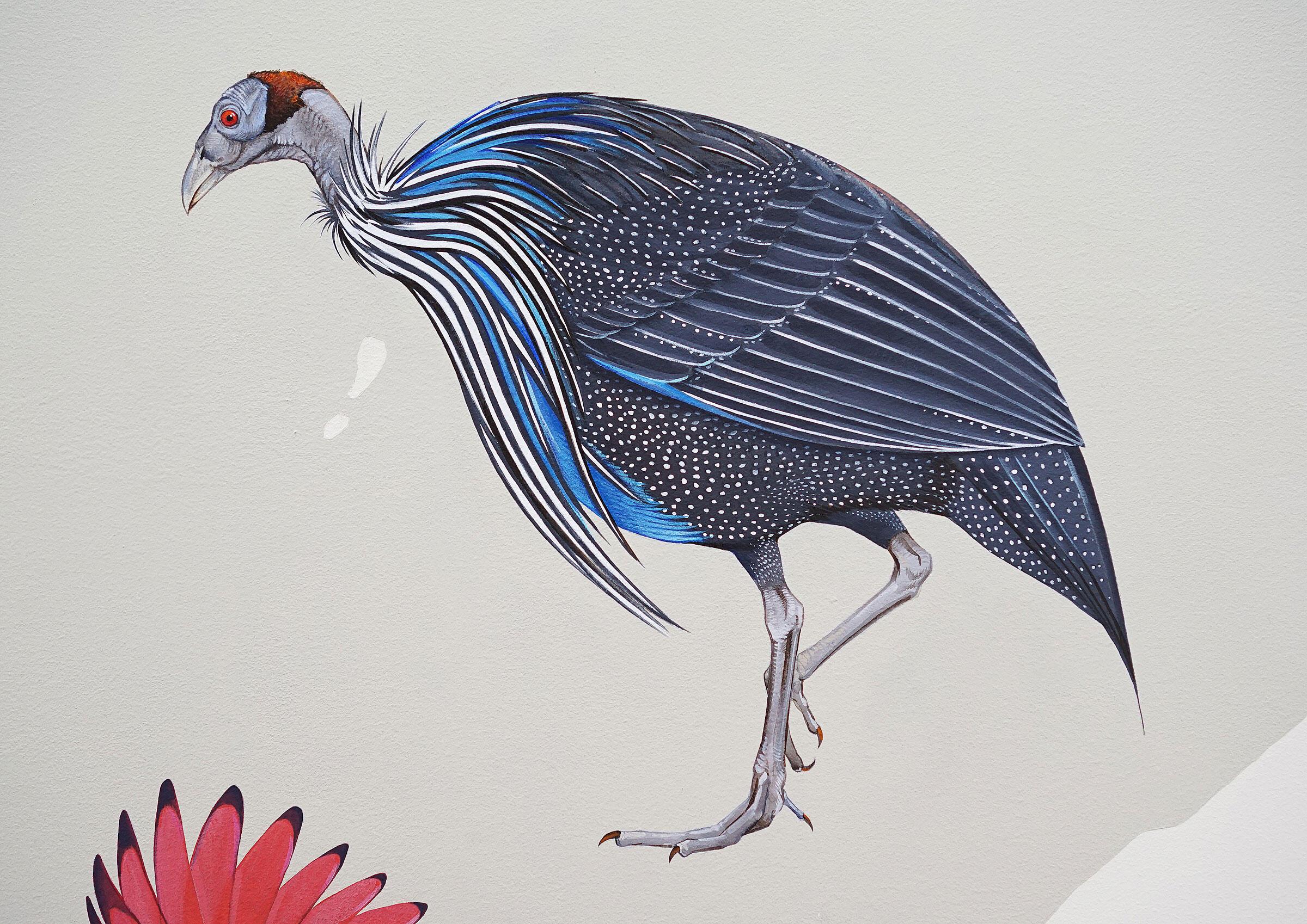 "Vulturine Guineafowl. Courtesy of <a href=""http://inkdwell.com/"">Ink Dwell</a>"