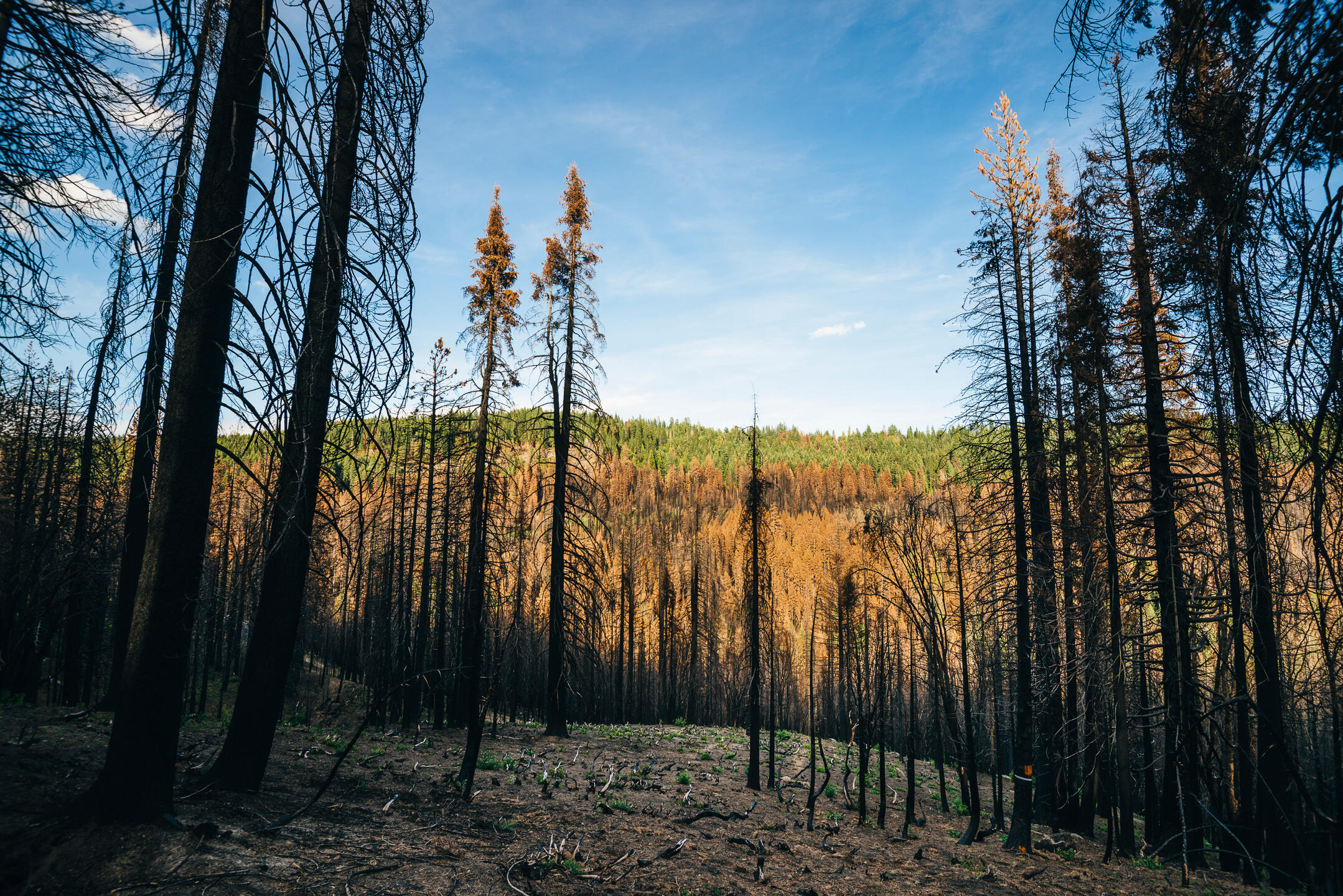 Looking south on the Stanislaus National Forest, a gradient of burn severity is visible. The silhouette of the scorched foreground contrasts with the high to low severity on the north-facing slope in the distance. Ken Etzel