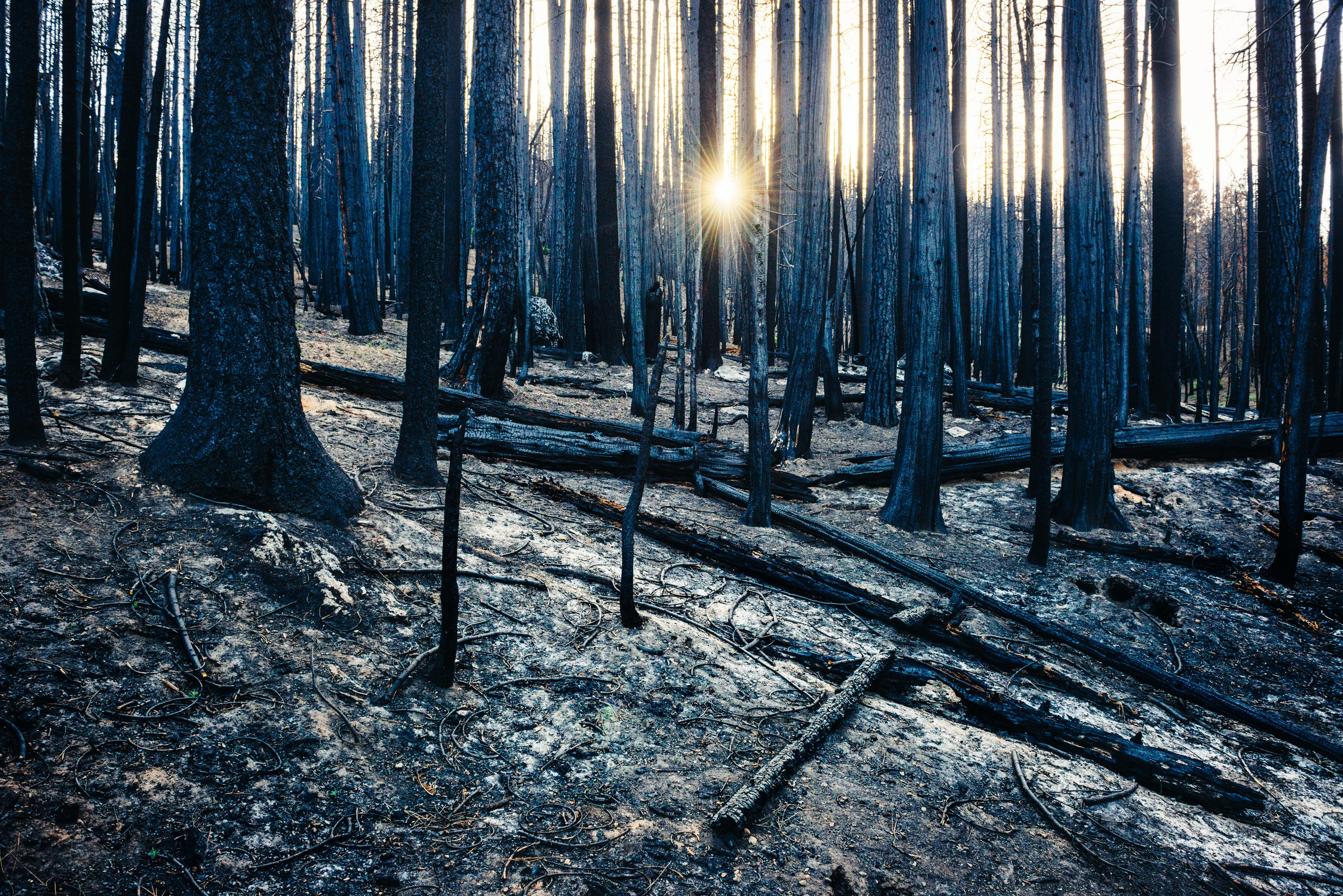 """This mixed conifer """"snag forest"""" rests in a desolate state. Not only was the above-ground vegetation affected by the fire, but the soil chemistry and seed stock can be changed and lost, too. Ken Etzel"""
