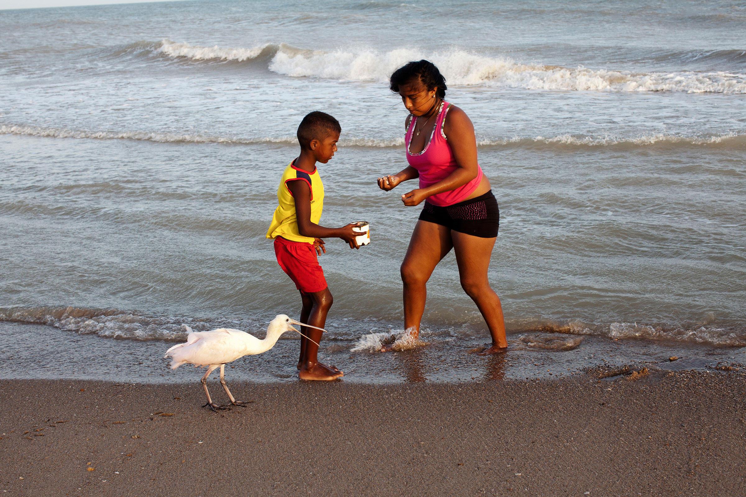 Dos habitantes del Santuario Los Flamencos y su dócil Espátula Rosada observan las olas en busca de mariscos y caracoles en la madrugada. Carlos Villalón