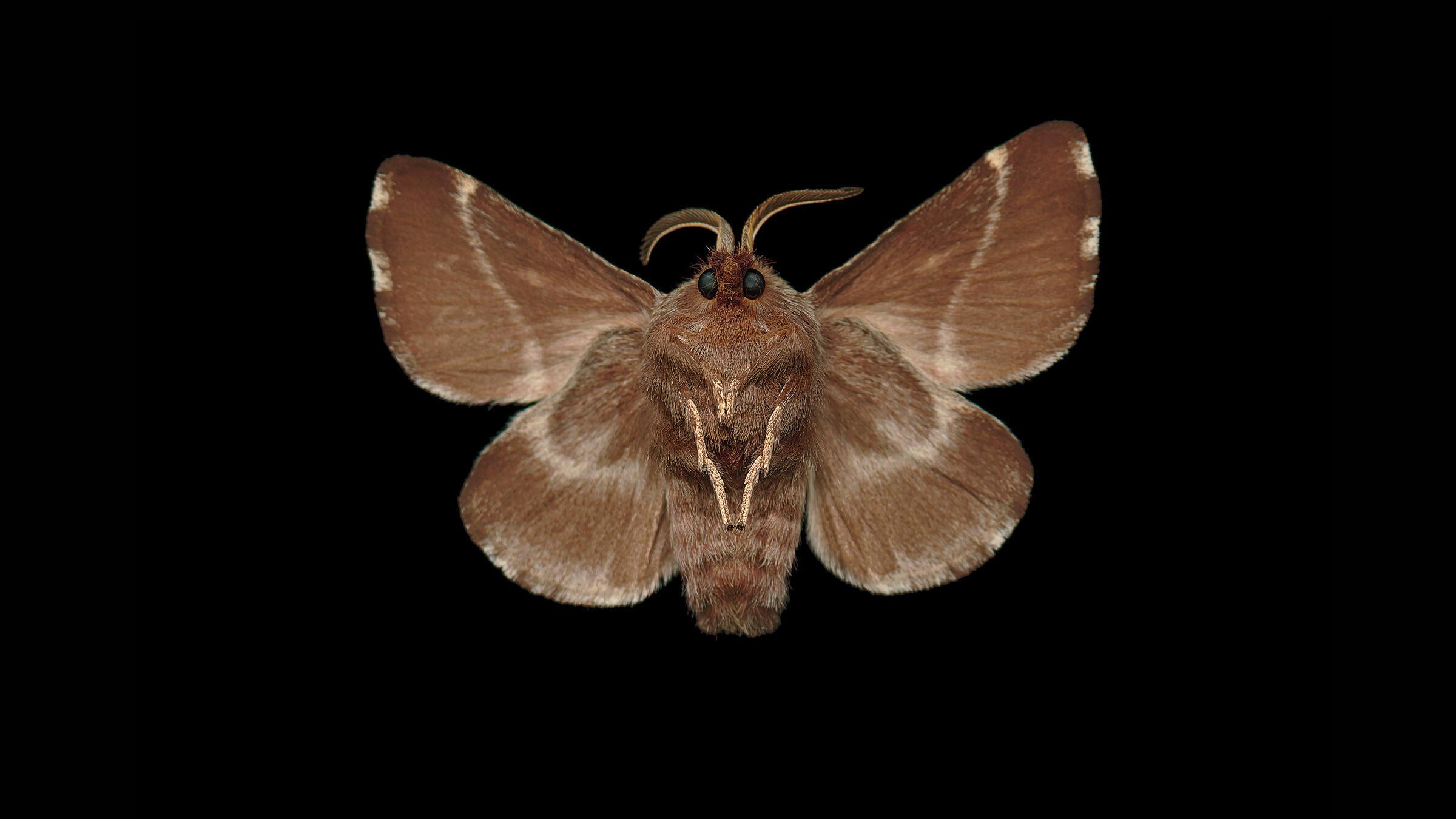 Caterpillar Month. Jim des Ricières