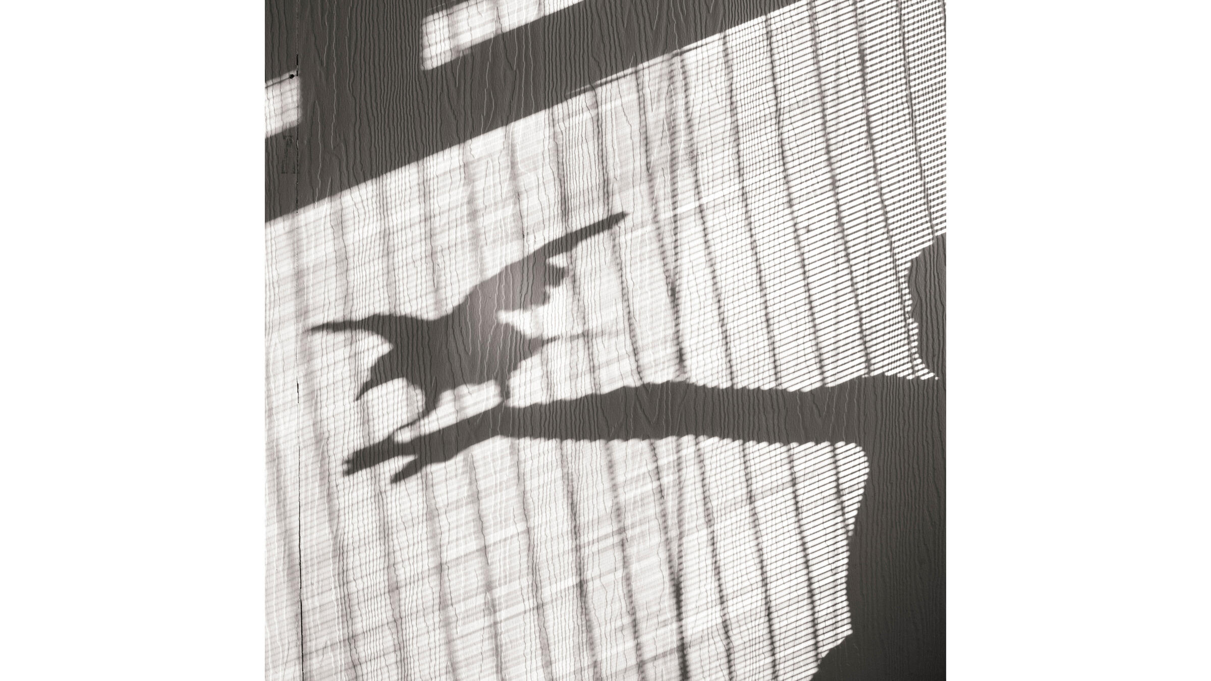 Morning shadows with Roo. Cameron Bloom