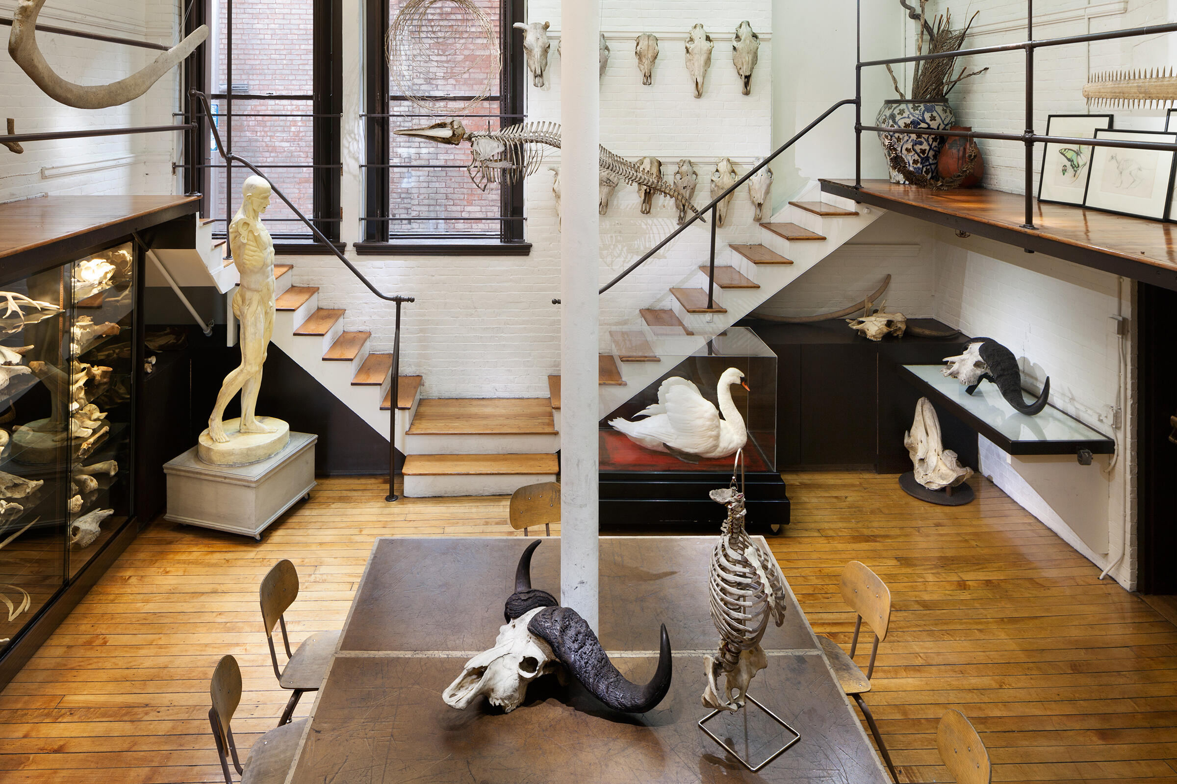 "A view of the ""bone room."" Richard Barnes"