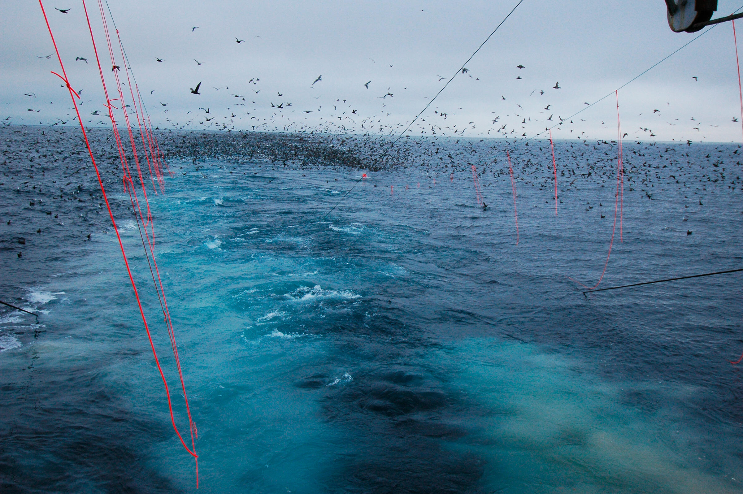 The two streamer lines on this trawl vessel (photographed in the Bering Sea in 2005) are preventing thousands of shearwaters from getting tangled in the boat's cables. Ed Melvin/Washington Sea Grant