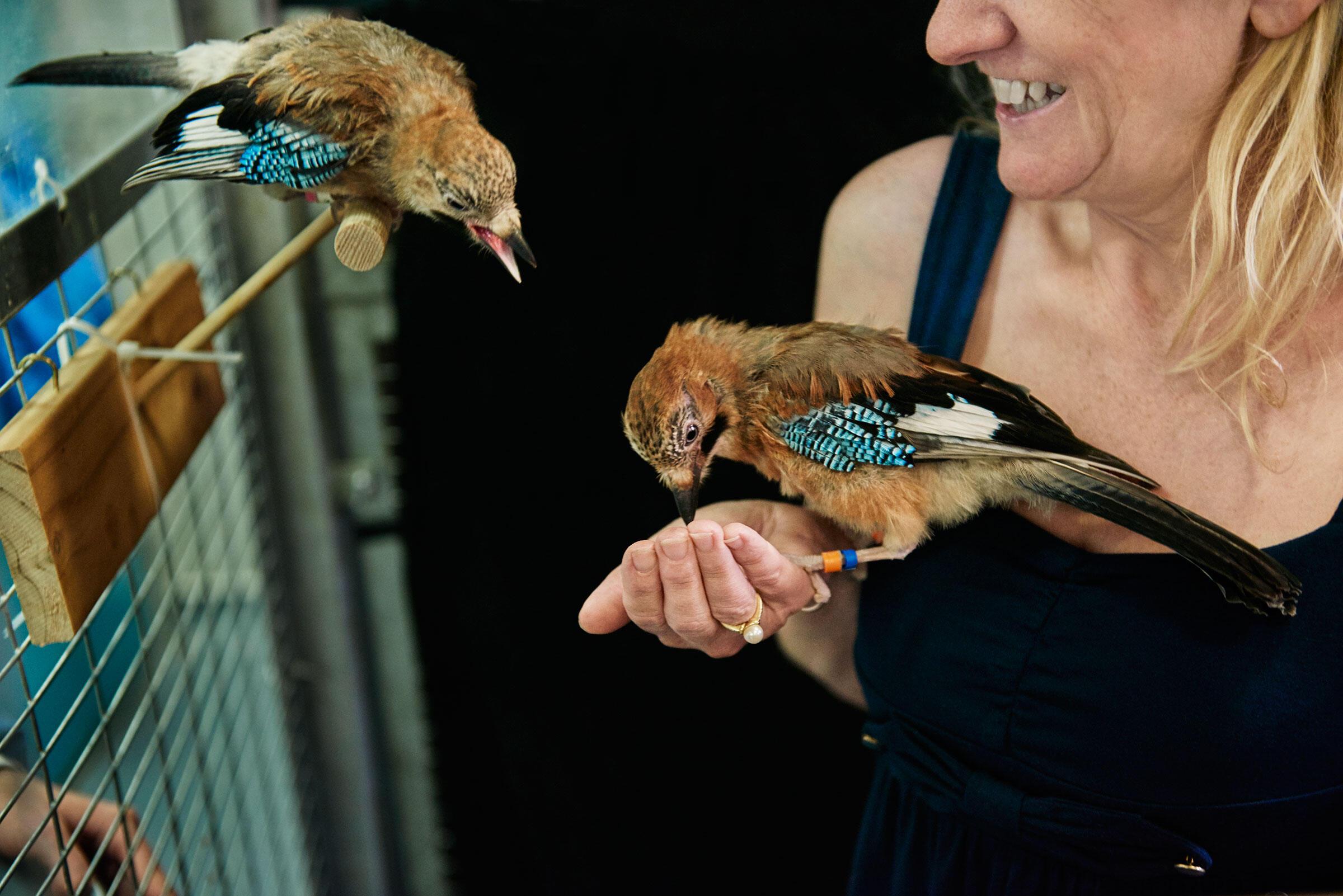 Researcher Nicky Clayton with captive Eurasian Jays. Trevor Ray Hart