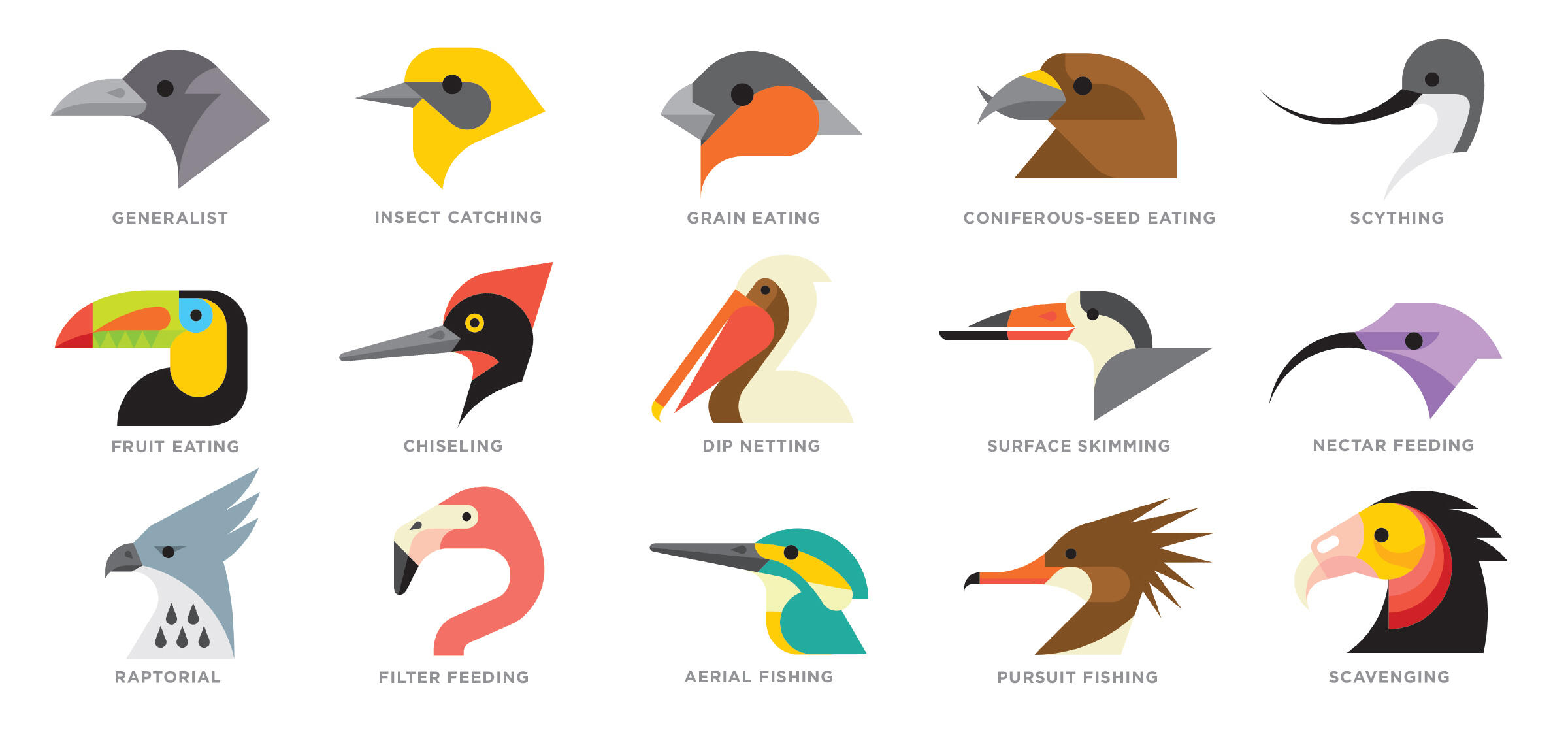 The dizzying diversity of beak shapes is largely a reflection of the foods the birds eat. These are just a few representative examples. Illustration: Tyler Lang