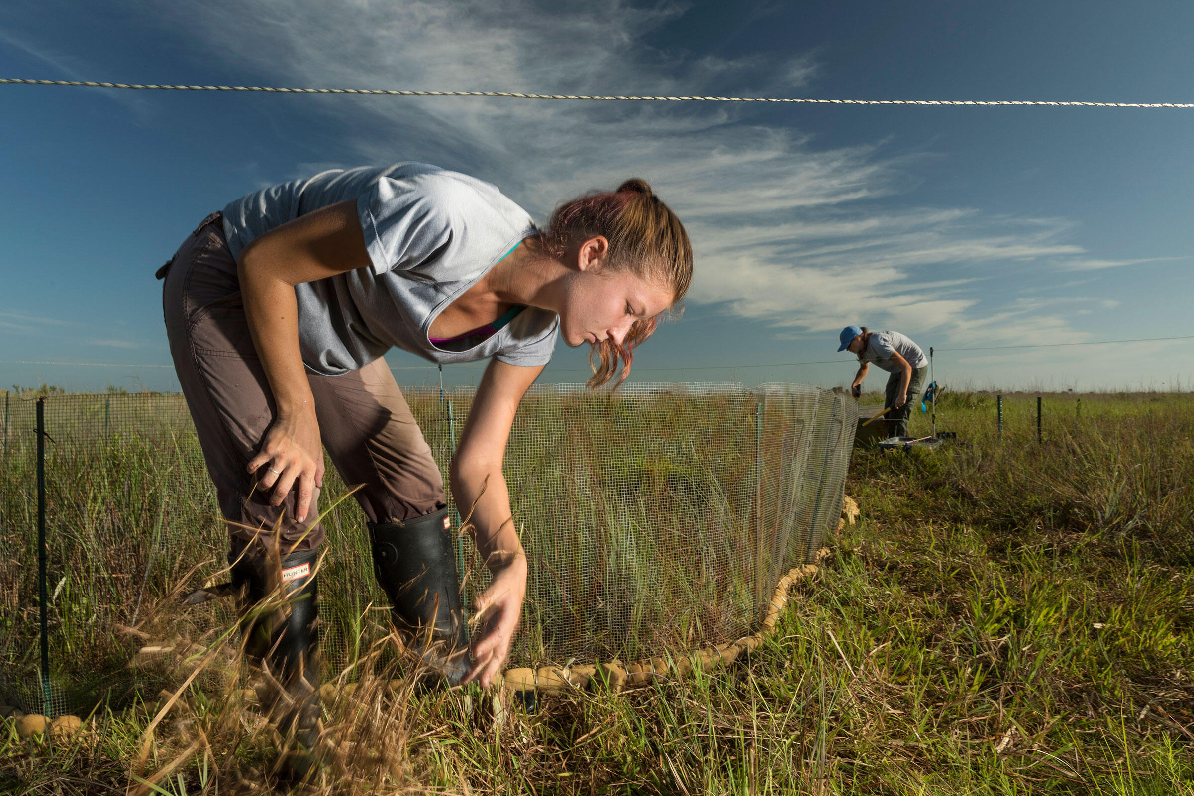 USFWS field techs Natalie Sweeting (foreground) and Rebecca Windsor clear away grasses around a new nest-protection fence. Mac Stone