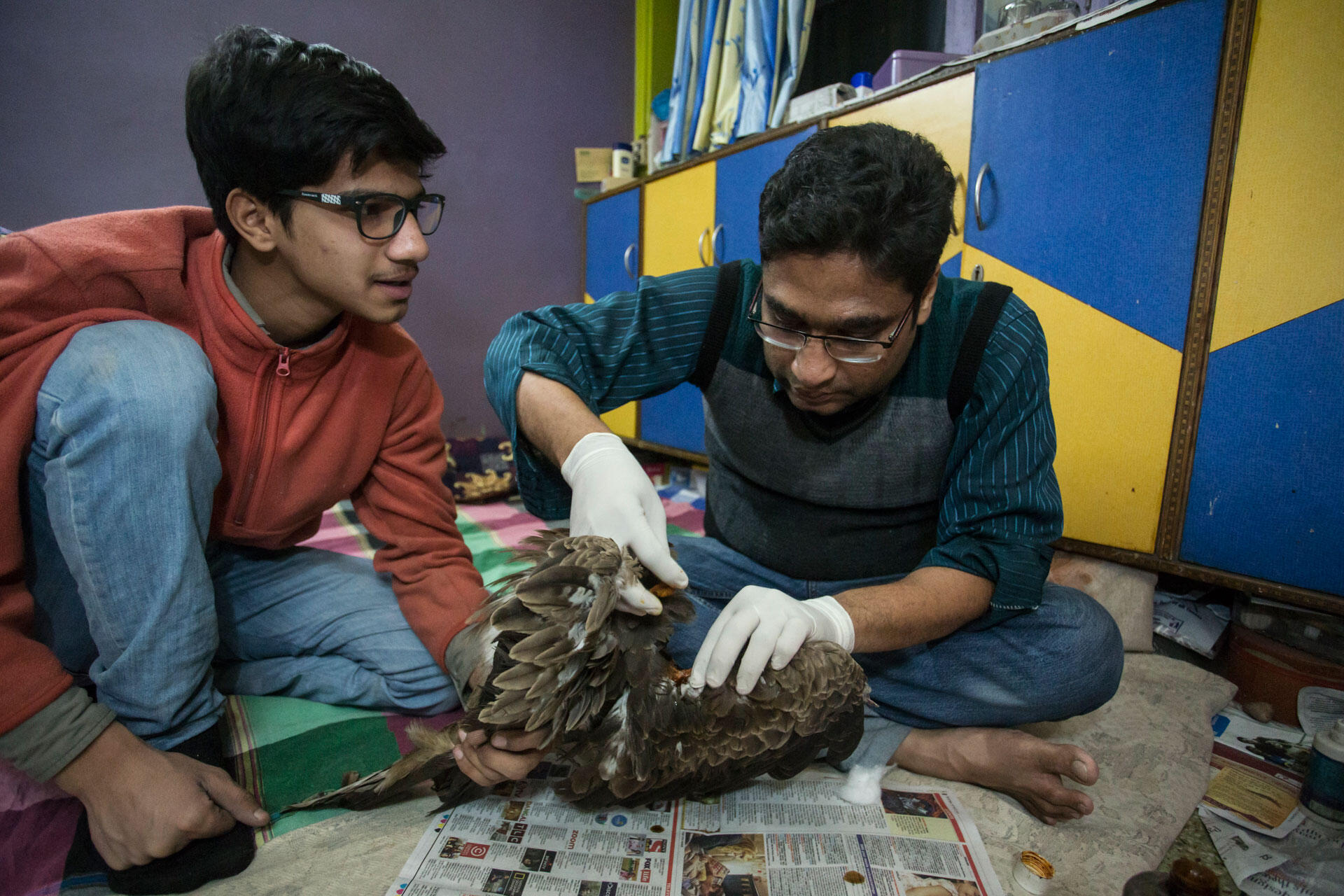 Nadeem Sherzhad and his assistant, Mohammed Farman, perform surgery on the rescued kite. Luke Massey