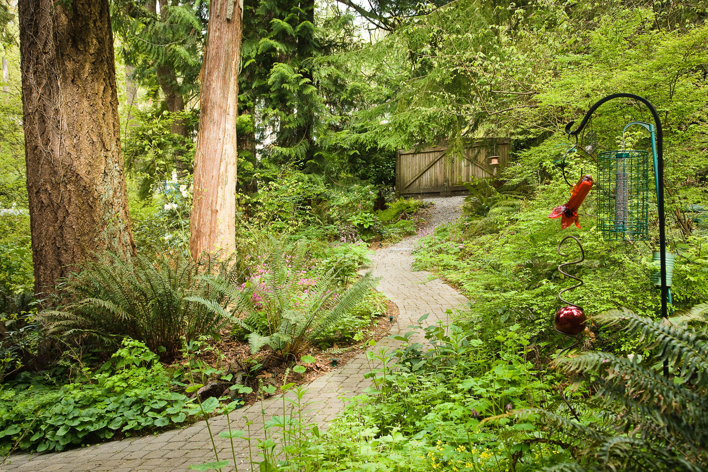 Bird feeders are surrounded by a variety of native plants, including sword ferns, wild ginger, red huckleberries, and Douglas-fir and western red cedar trees on Washington's Mercer Island. Mark Turner