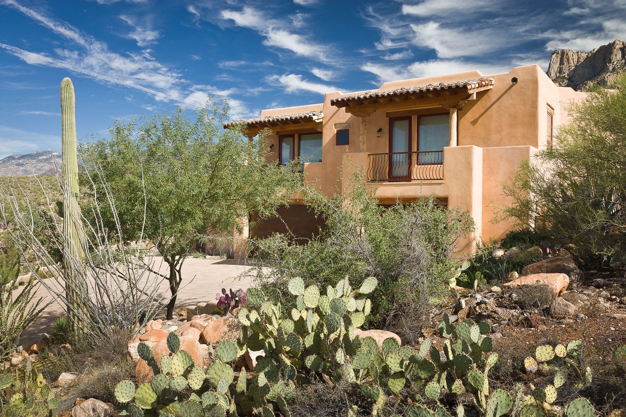 Engelmann's prickly pear, saguaro, ocotillo, and desert willow fill a desert garden in Tucson, Arizona. Mark Turner