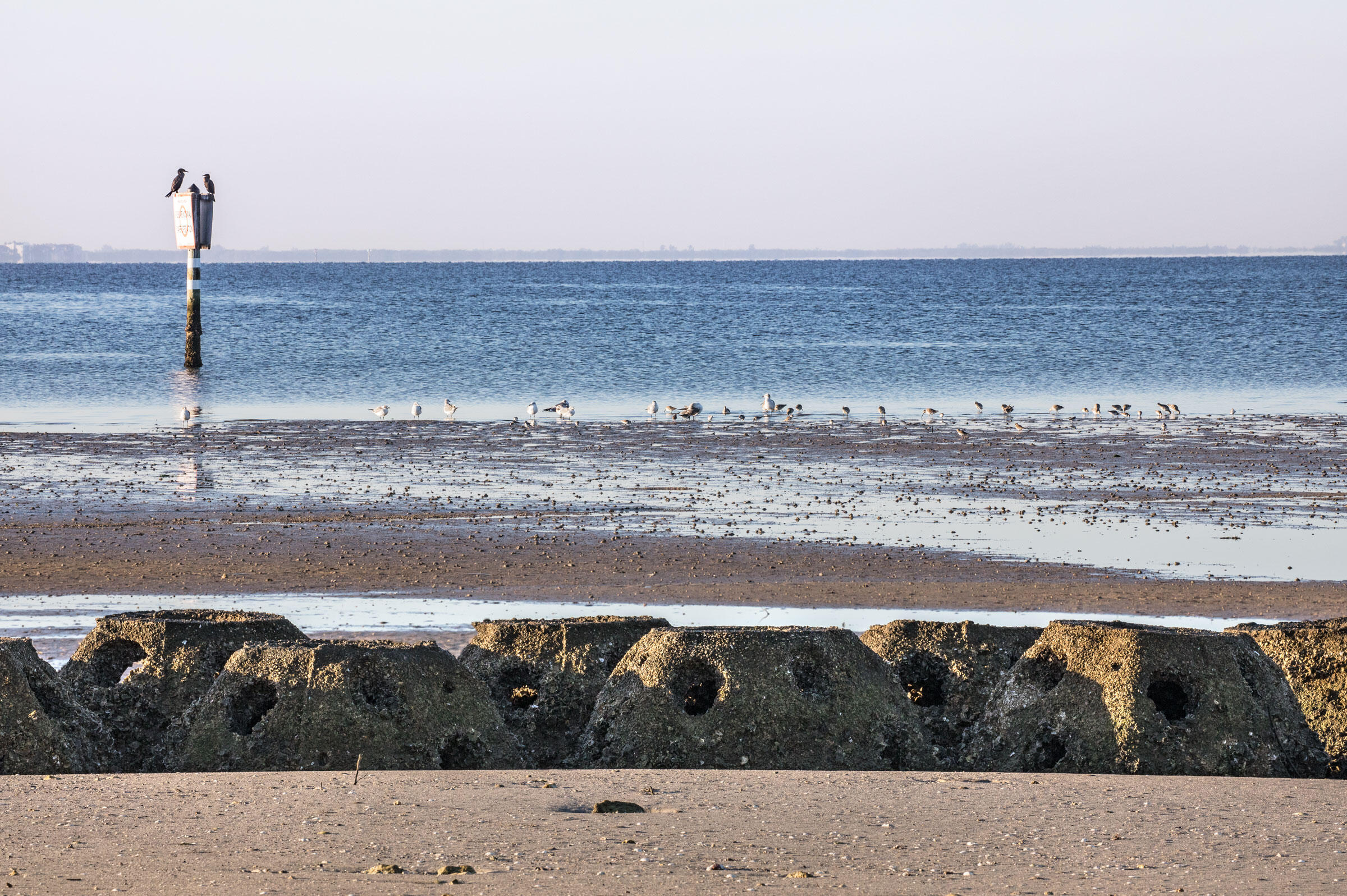 Shorebirds forage in a mudflat beyond a line of Reef Balls off of Bird Island; the manmade breakwater absorbs large waves and provides habitat for oysters. Andrew Moore