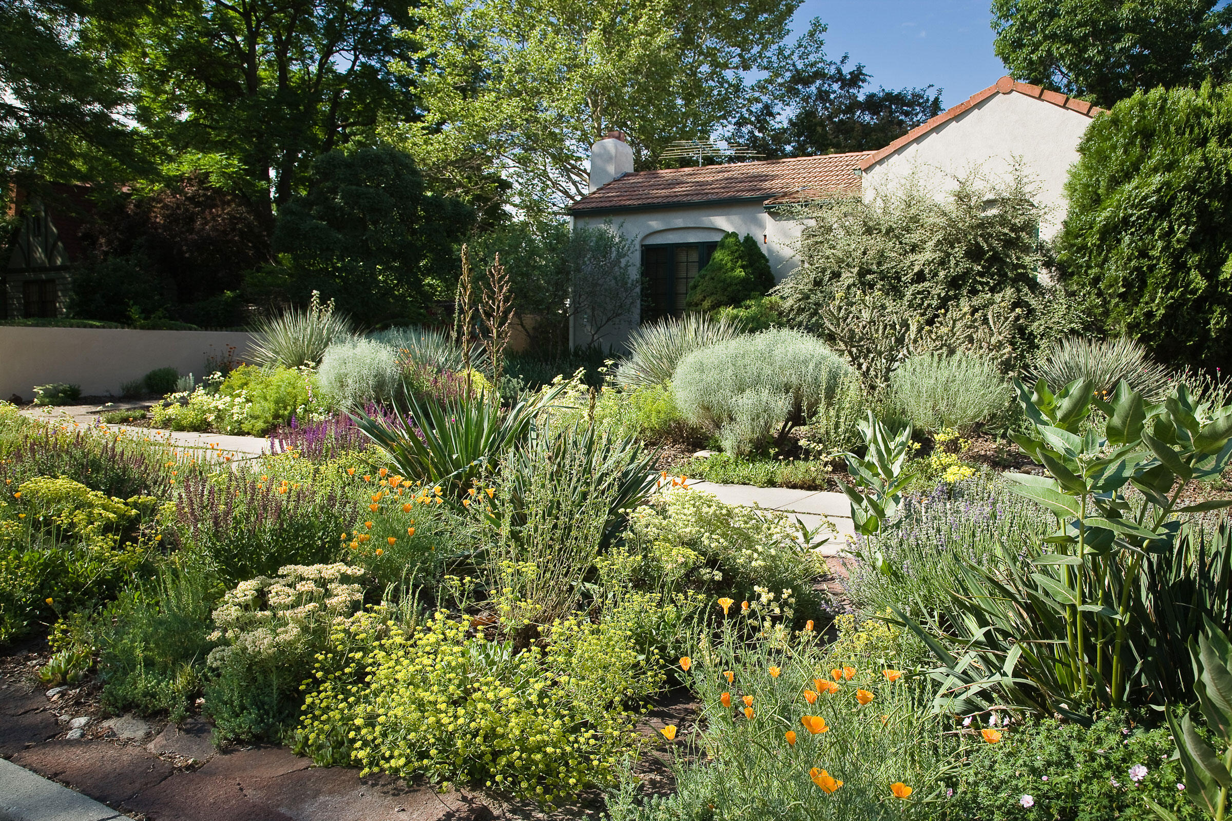 A front-yard garden in Boise, Idaho, planted by Patricia Zimmerman, hosts wyeth, sulphur buckwheat, penstemon, yuccas, green and gray rabbitbrush, and California poppies. Mark Turner