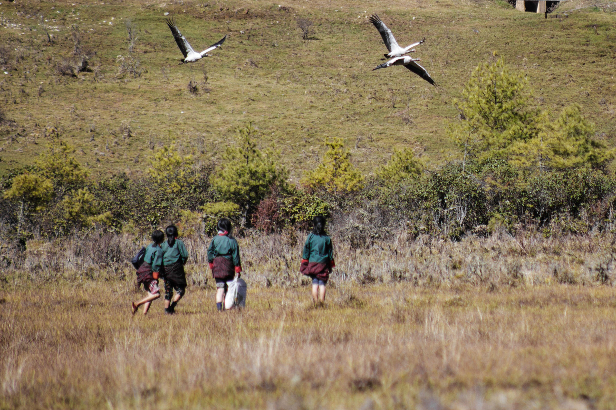 Local schoolchildren on their way home pass through one of the smaller roosting areas. These wetlands are not part of the main feeding ground and represent the maximum amount of interaction between the locals and birds. Ambika Singh