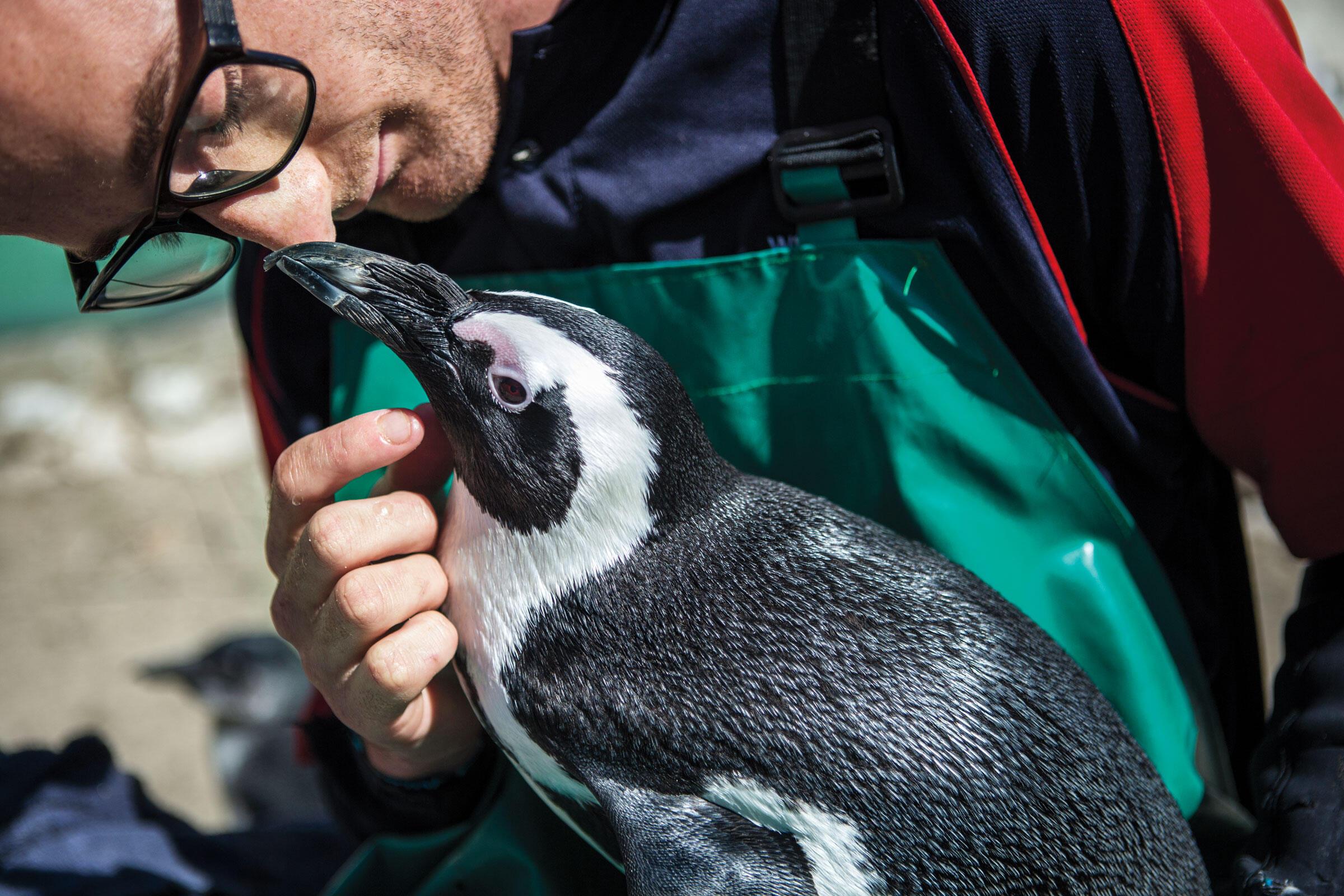 Seabird rehabilitator Peter van der Linde nuzzles a long-term resident named Skipper. Alexia Webster