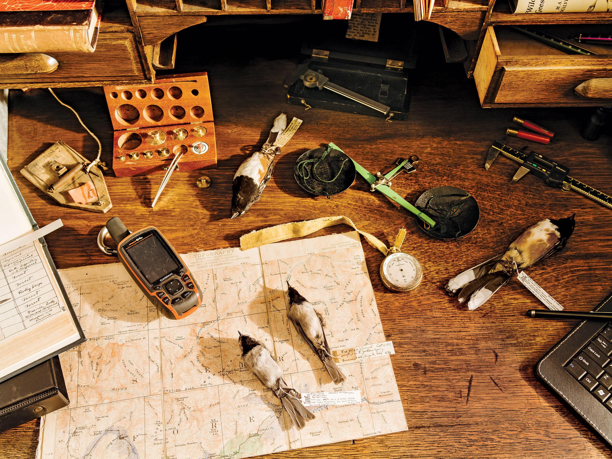 Herramientas de campo y especímenes de aves de los estudios originales y modernos.