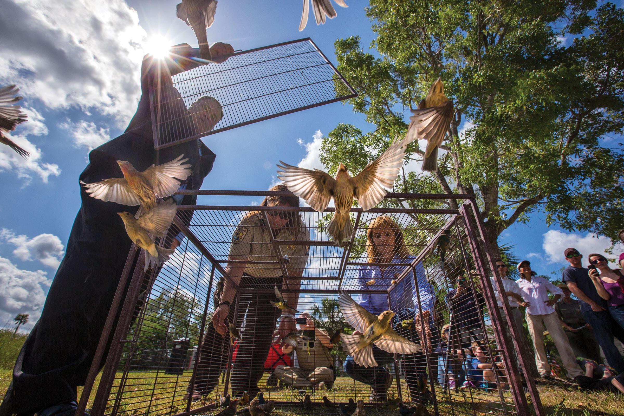 En un evento de prensa en abril, las autoridades liberaron aproximadamente 130 aves capturadas de traficantes, que se consideraron lo suficientemente saludables como para sobrevivir en hábitats naturales.