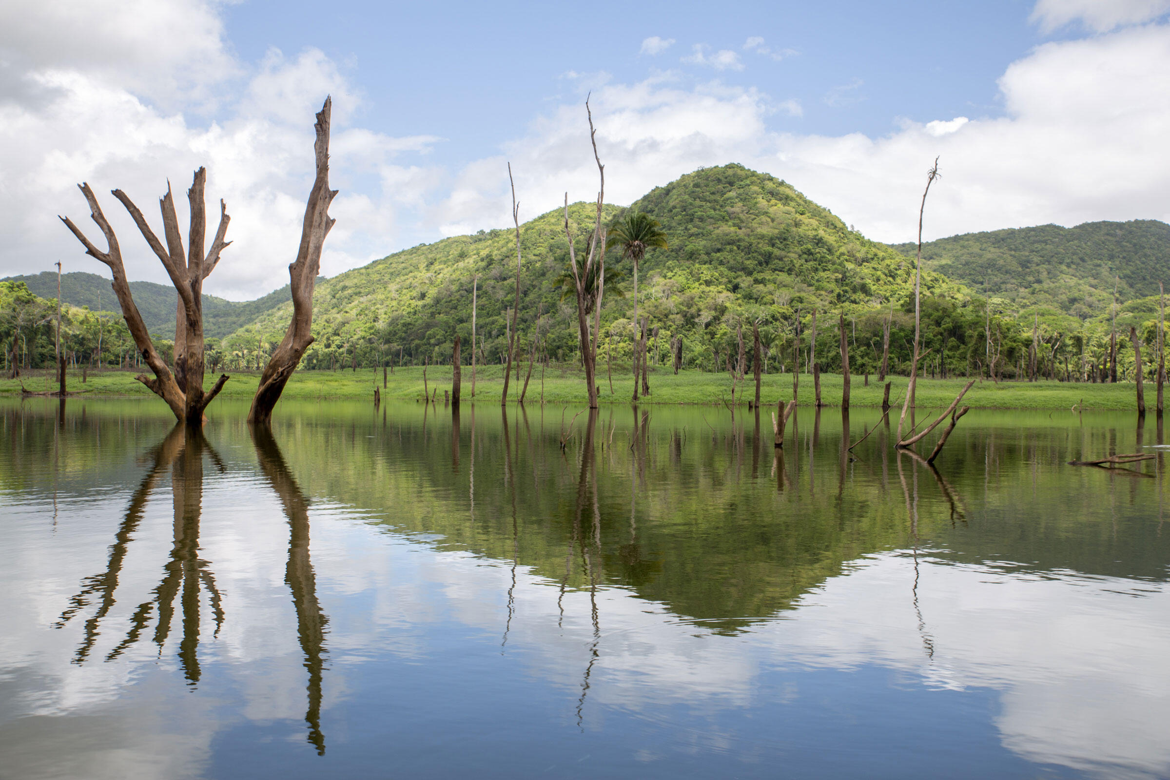 Tree stumps and snags sit in the depleted Macal River. Camilla Cerea/Audubon