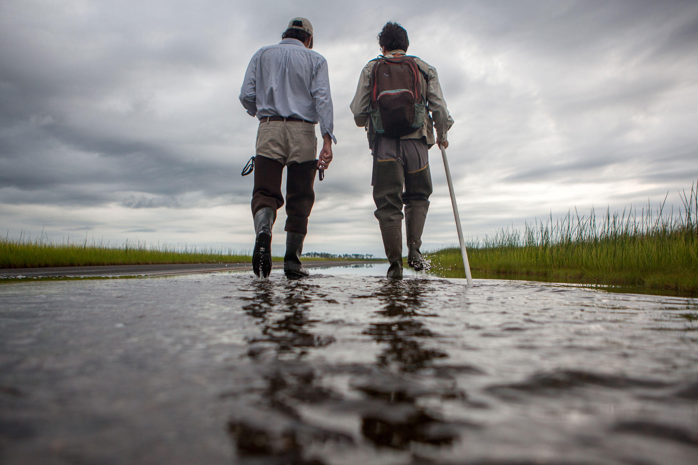 Walker Golder, Atlantic Flyway coast director at the National Audubon Society, and Dave Curson walk through a flooded section of Maple Dam Road on the edge of Blackwater NWR. Camilla Cerea/Audubon