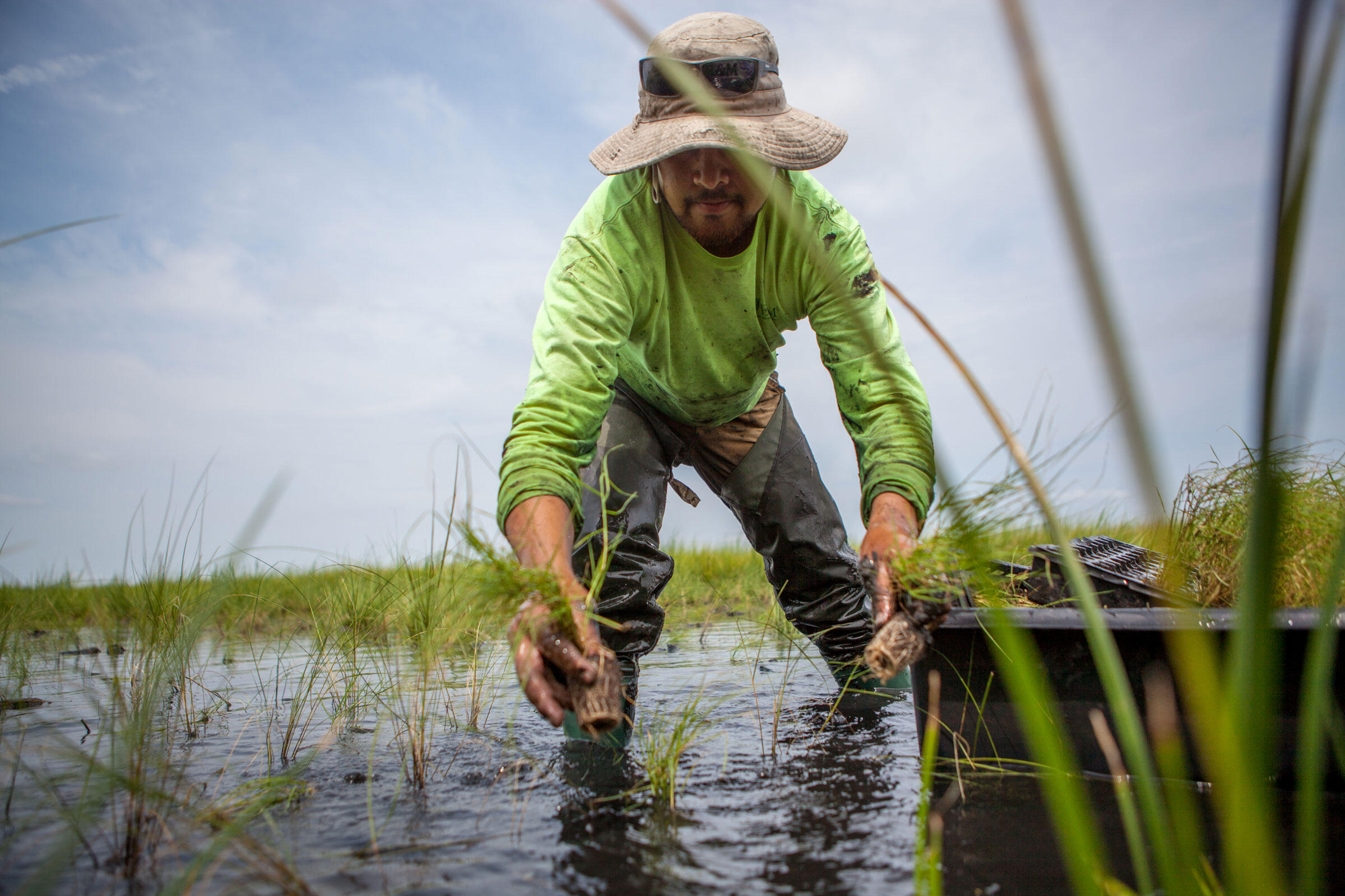 A landscaper plants grass at Blackwater National Wildlife Refuge to restore marsh inundated by rising seas. Camilla Cerea/Audubon