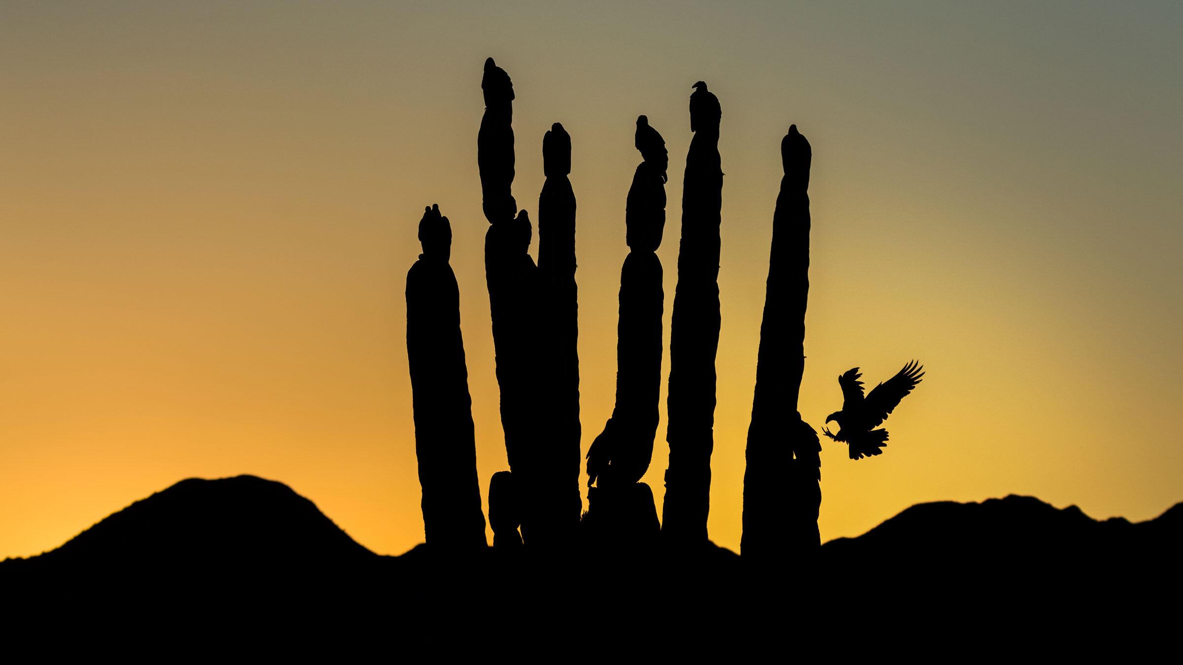 Turkey Vultures. Blake Shaw/Audubon Photography Awards