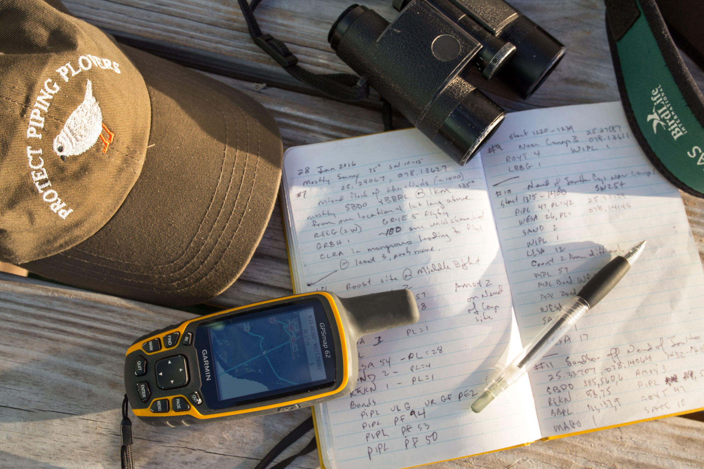 Census tools:The team plans their route and stops based on GPS coordinates from prior successful surveys. Hats (plover-themed please!) and binoculars are must-haves, too. Camilla Cerea/Audubon