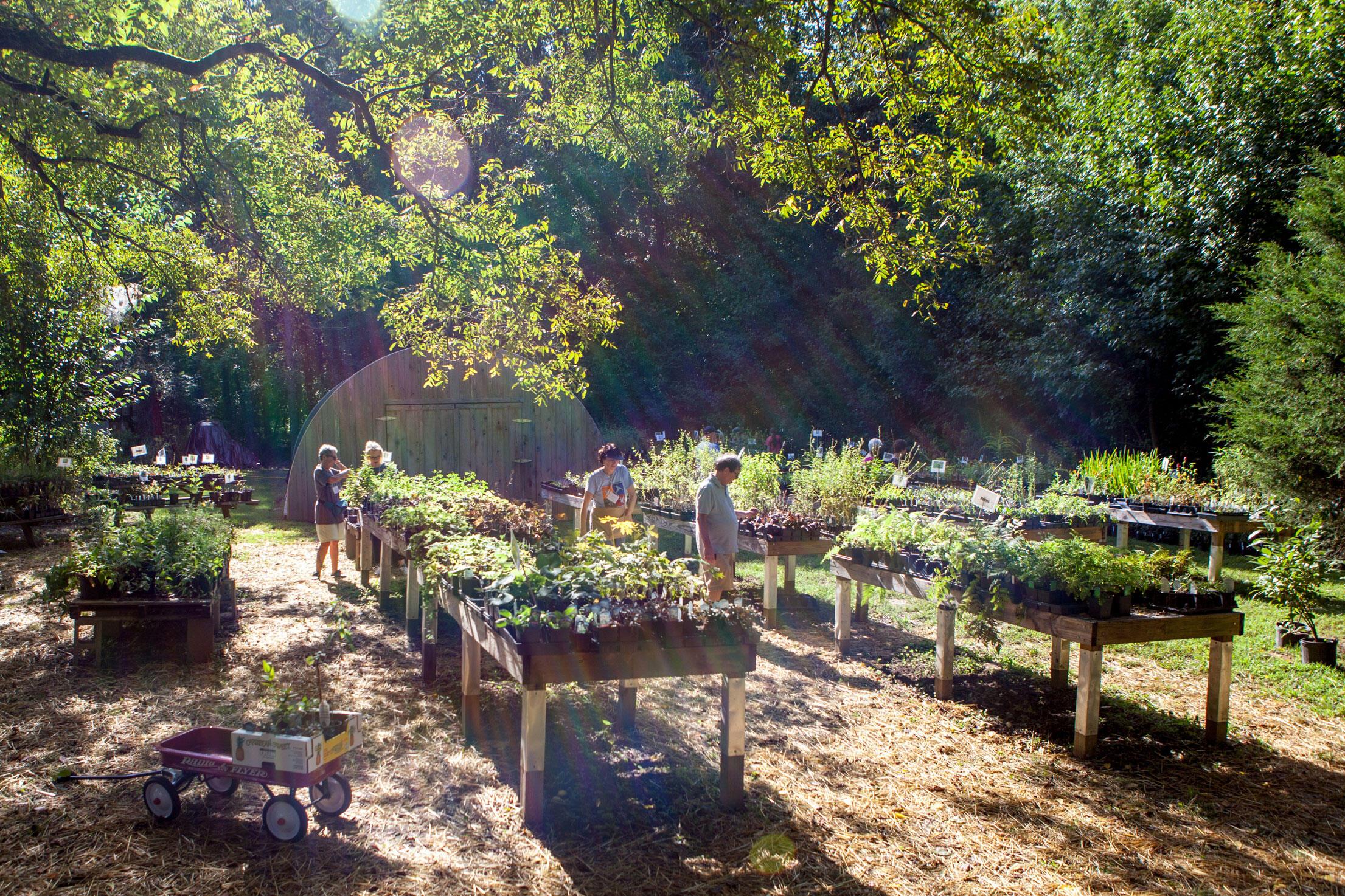 The center's 2015 fall Native Plant Sale. Camilla Cerea/Audubon