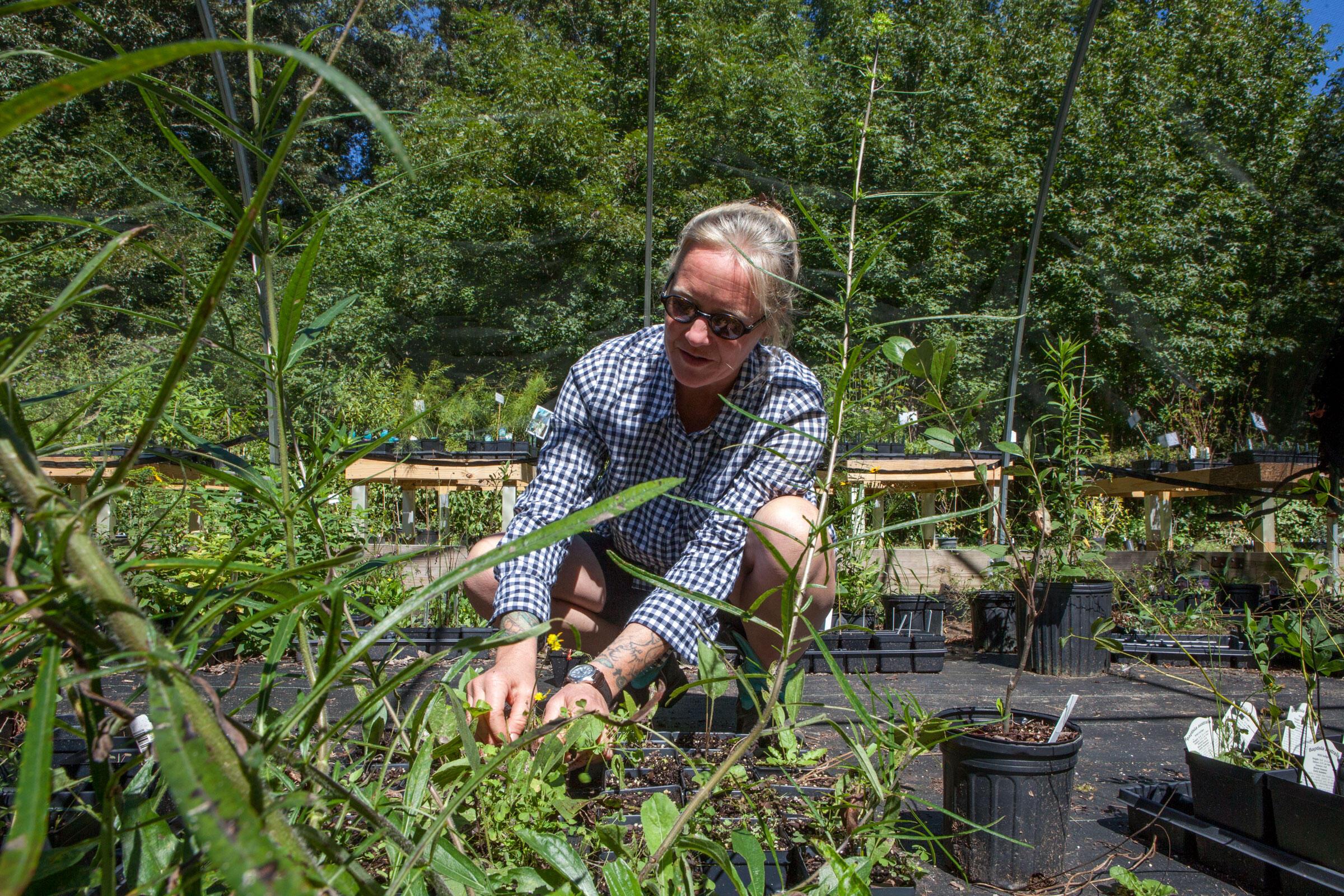 Lamberson weeding out the non-native species. Camilla Cerea/Audubon