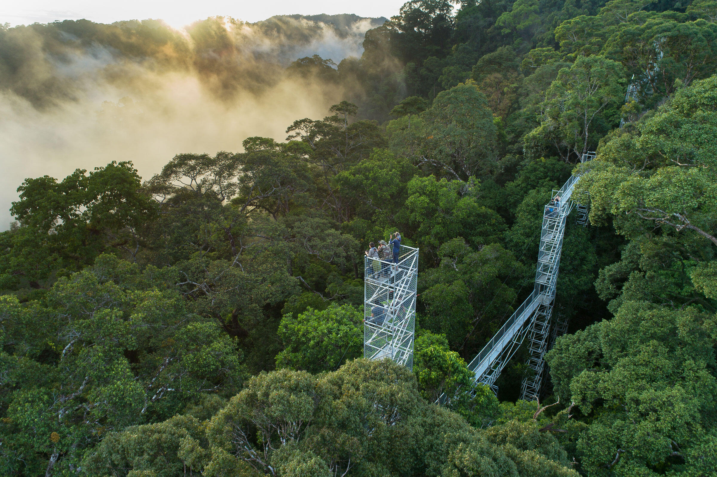 Brunei's Belalong Canopy Walkway offers unhindered views of the secretive denizens of the rainforest canopy. It's here, among the ripe mistletoe berries, that researchers are hoping to catch and analyze their first Spectacled Flowerpecker. Chien C. Lee