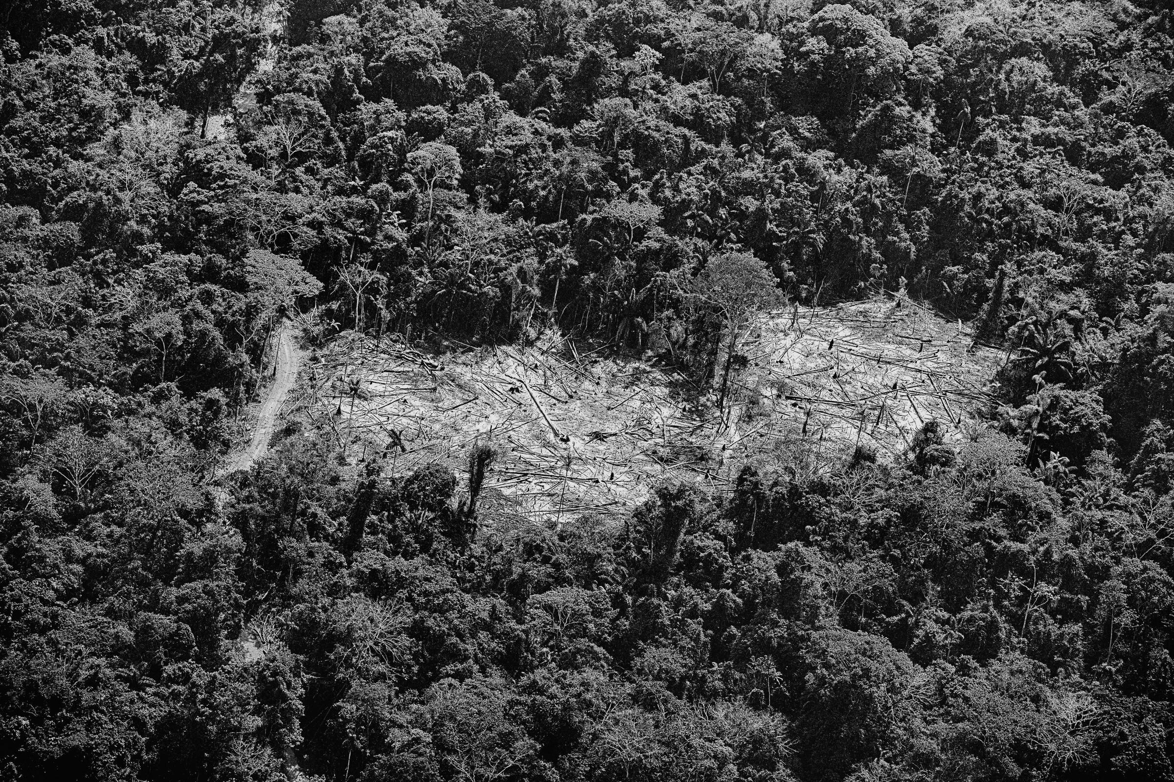 Deforestation in the Menkragnoti Indigenous territory in Brazil, which has also been targeted by mining companies.